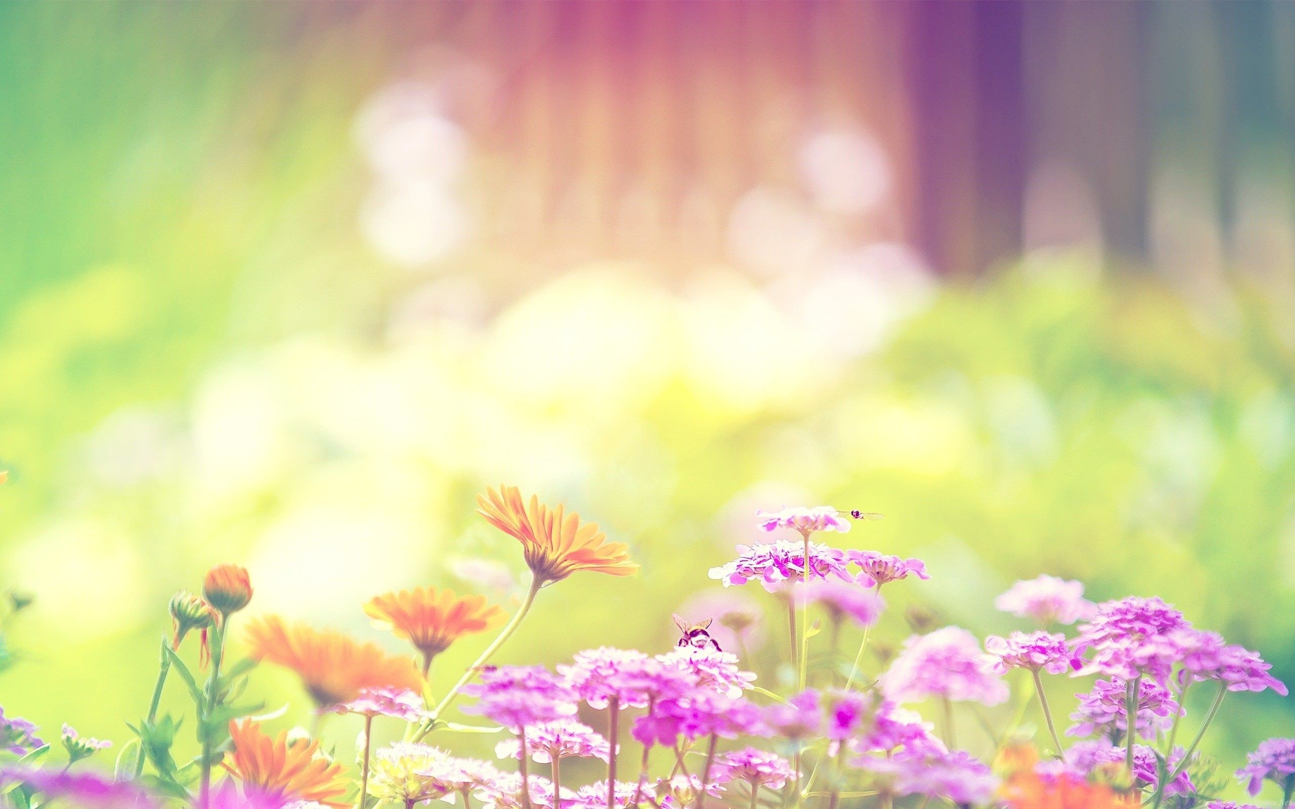 Res: 2560x1600, Free Summer Flowers Wallpapers Background Â« Long Wallpapers