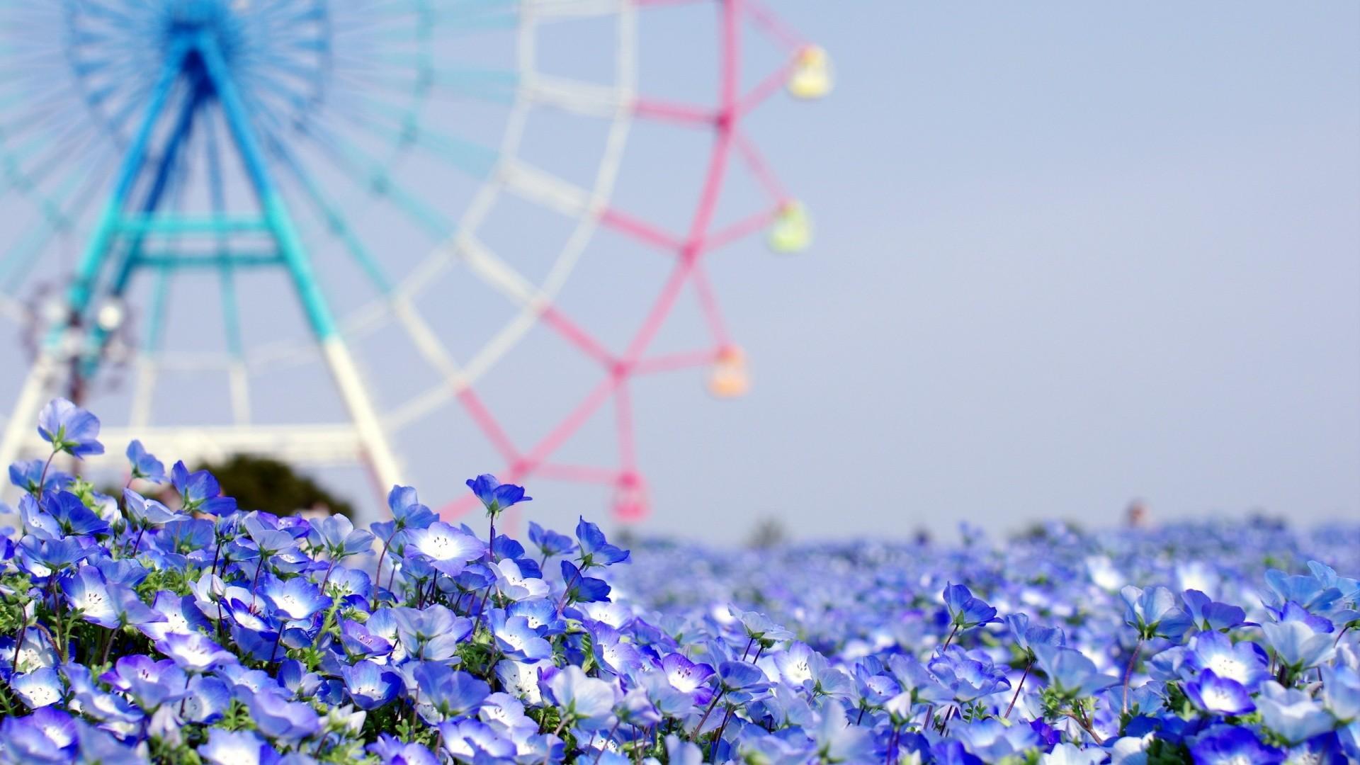 Res: 1920x1080, Summer Flowers Wallpaper 29988