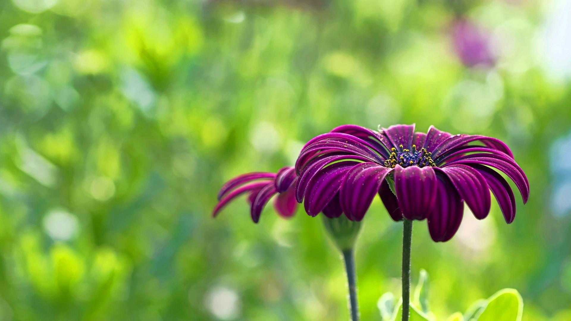 Res: 1920x1080, 9. summer-flower-wallpaper9-600x338