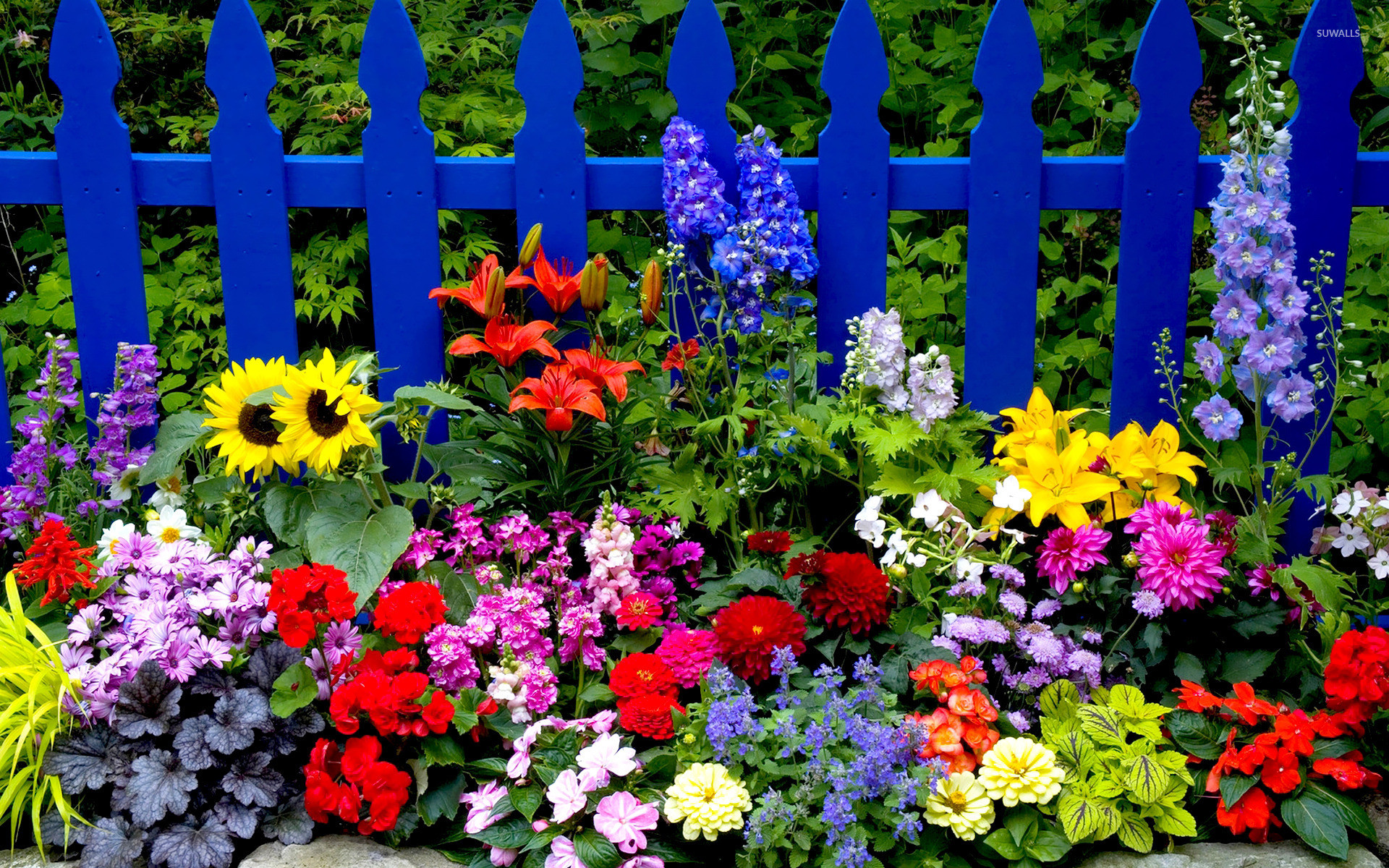 Res: 1920x1200, Multicolored summer flowers wallpaper
