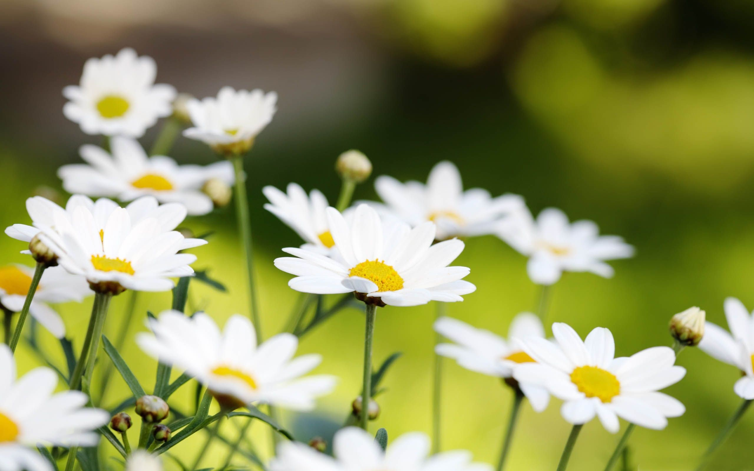 Res: 2560x1600, Summer Flowers Wallpapers - HD Wallpapers Inn