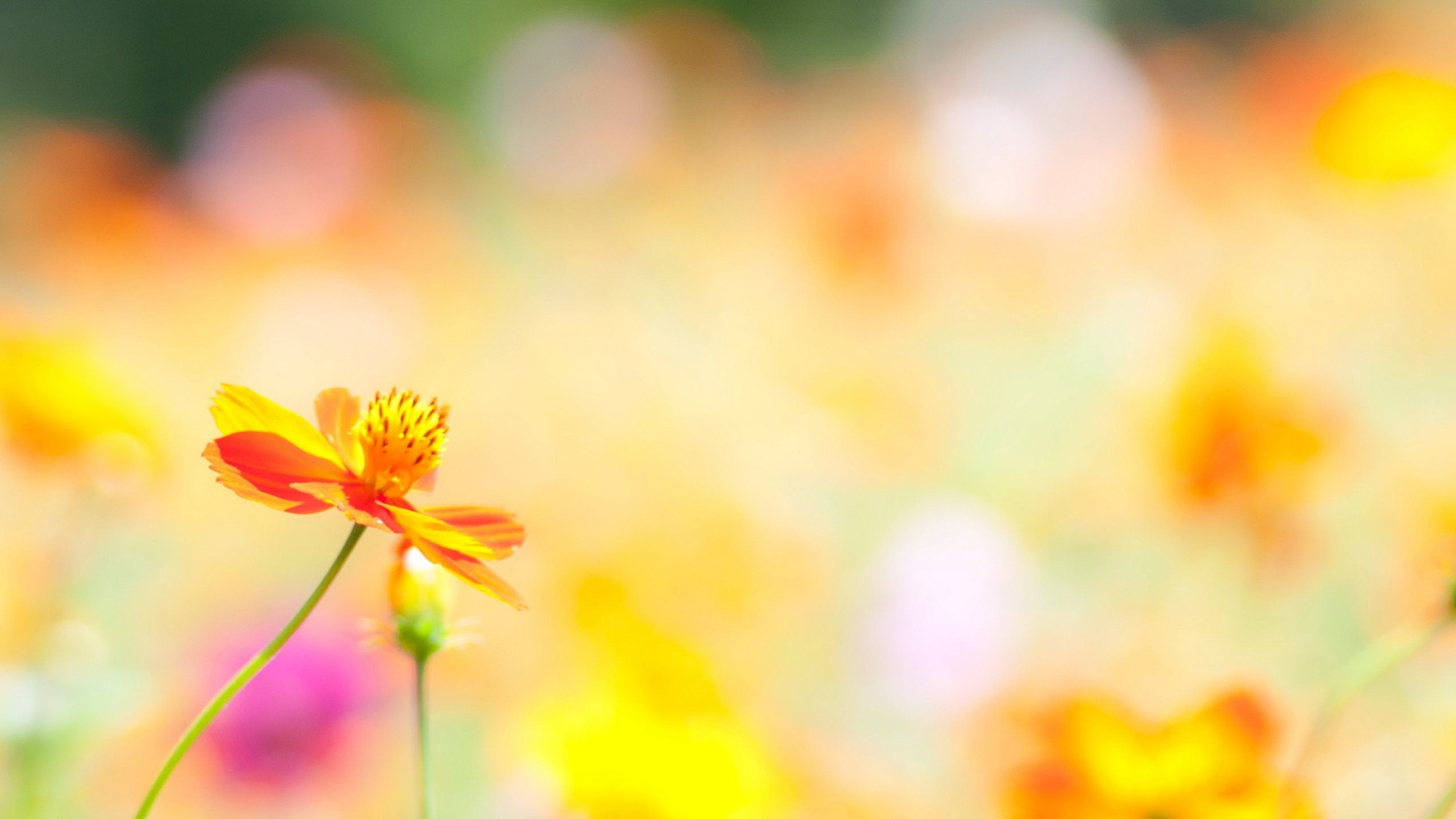 Res: 2560x1440, Download Convert View Source. Tagged on : Summer Flowers Wallpaper ...