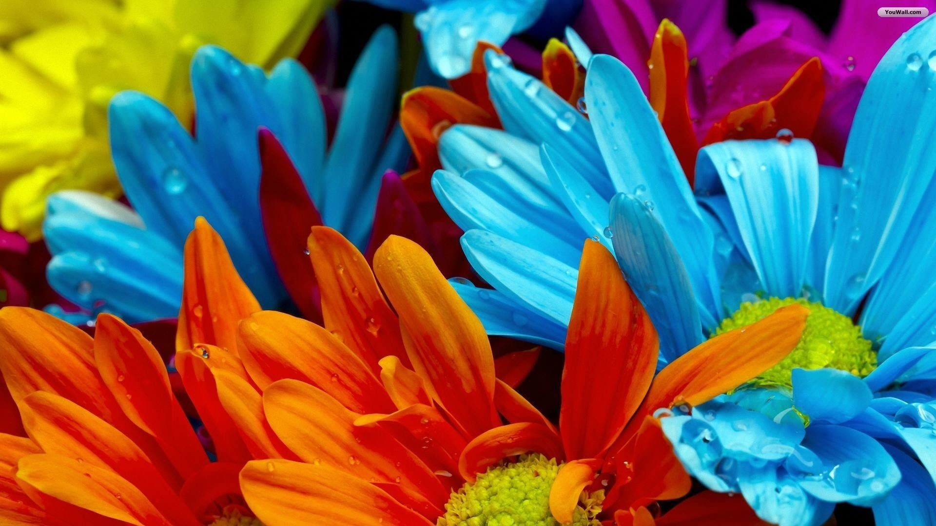 Res: 1920x1080, 7. summer-flowers-wallpaper7-2-600x338