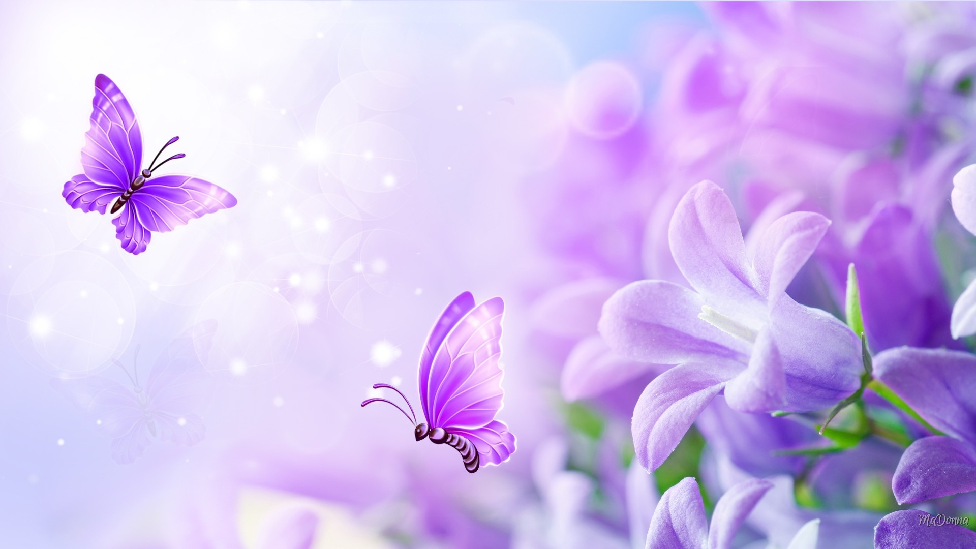 Res: 1920x1080, Bliss Soft Butterflies Pastel Summer Flowers Lilac Fragrant Lavender Floral  Flower Wallpaper Black And White