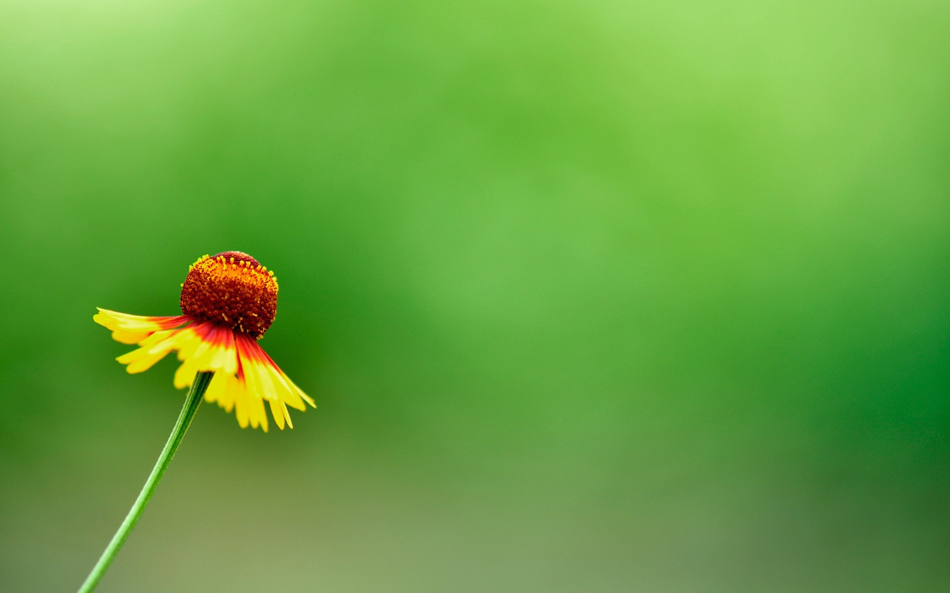 Res: 1920x1200, Image: Yellow Summer Flower wallpapers and stock photos. Â«