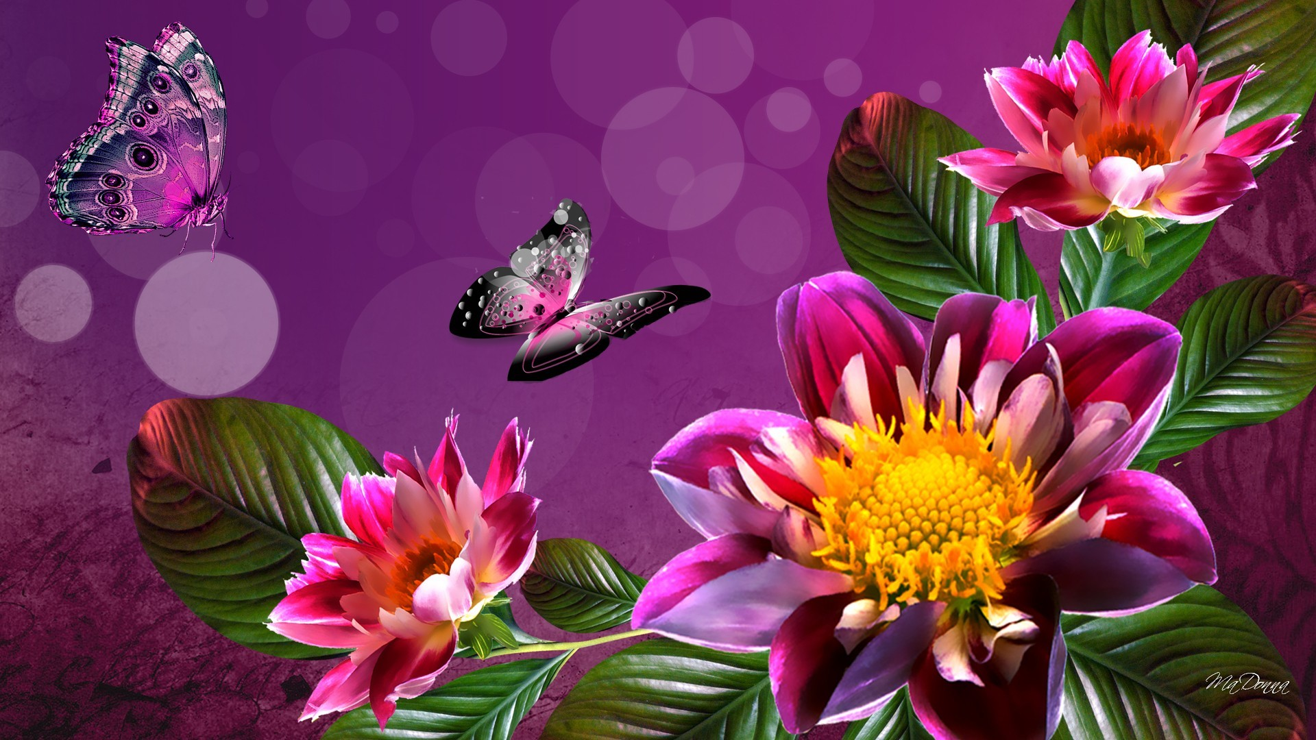 Res: 1920x1080, File: Summer Flower Desktop HDQ Cover.jpg – Ayako Orndorff –
