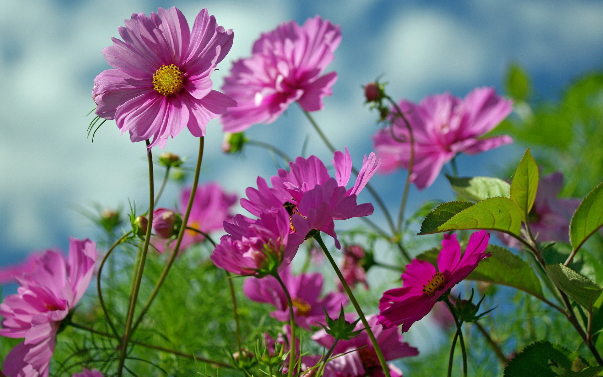 Res: 1920x1200, Summer Flowers Beauty 1920 x 1200 Download Close
