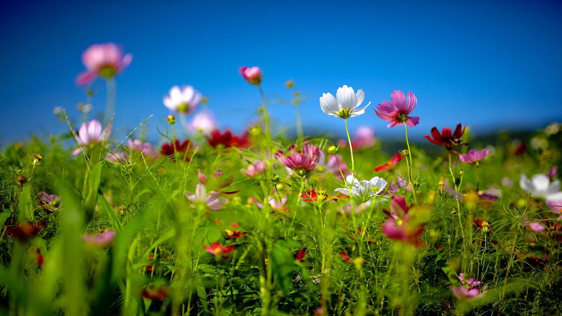 Res: 1920x1080, 7. summer-flower-wallpaper7-600x338