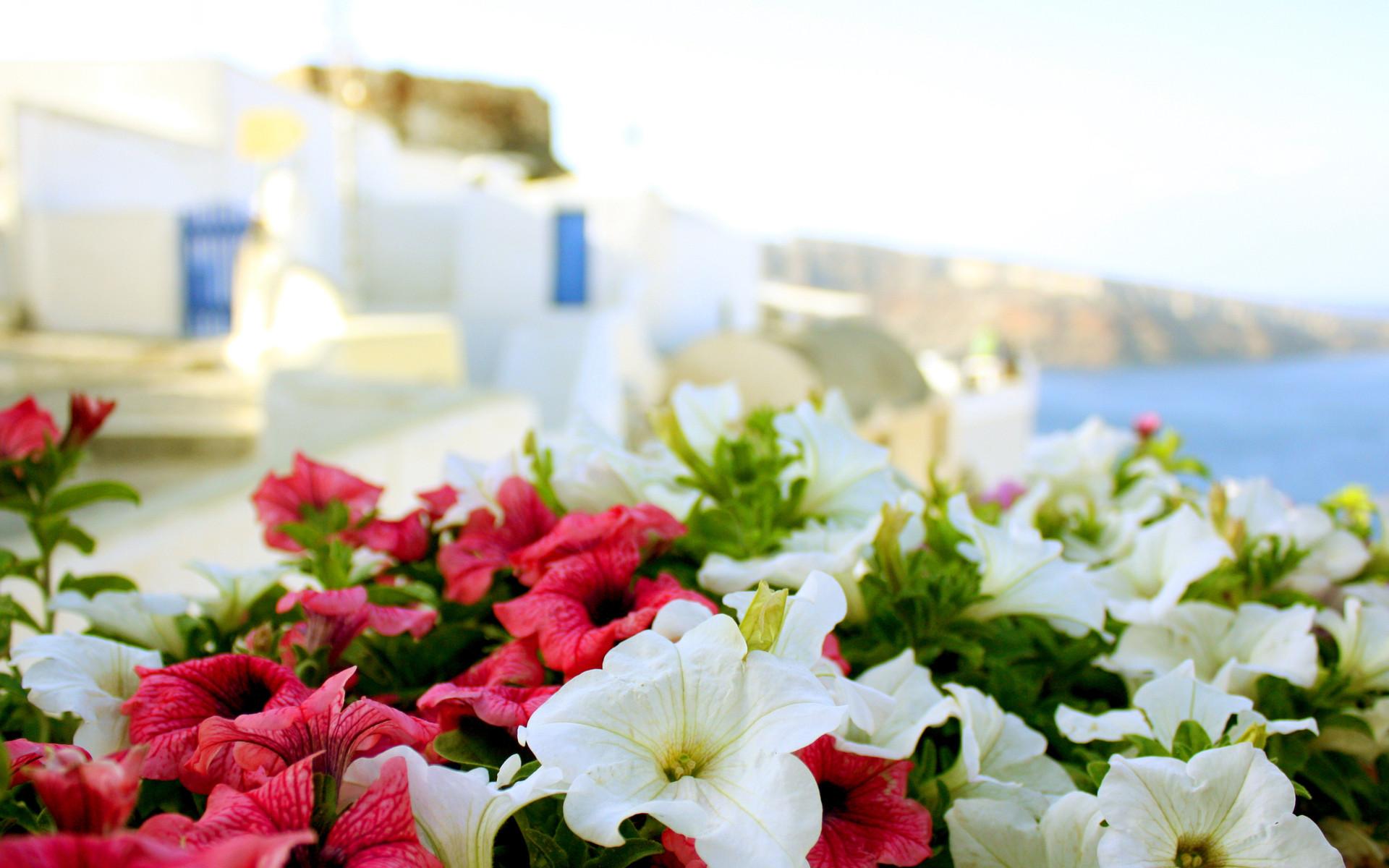 Res: 1920x1200, Greece sun sea summer flowers macro buildings wallpaper |  | 48490  | WallpaperUP