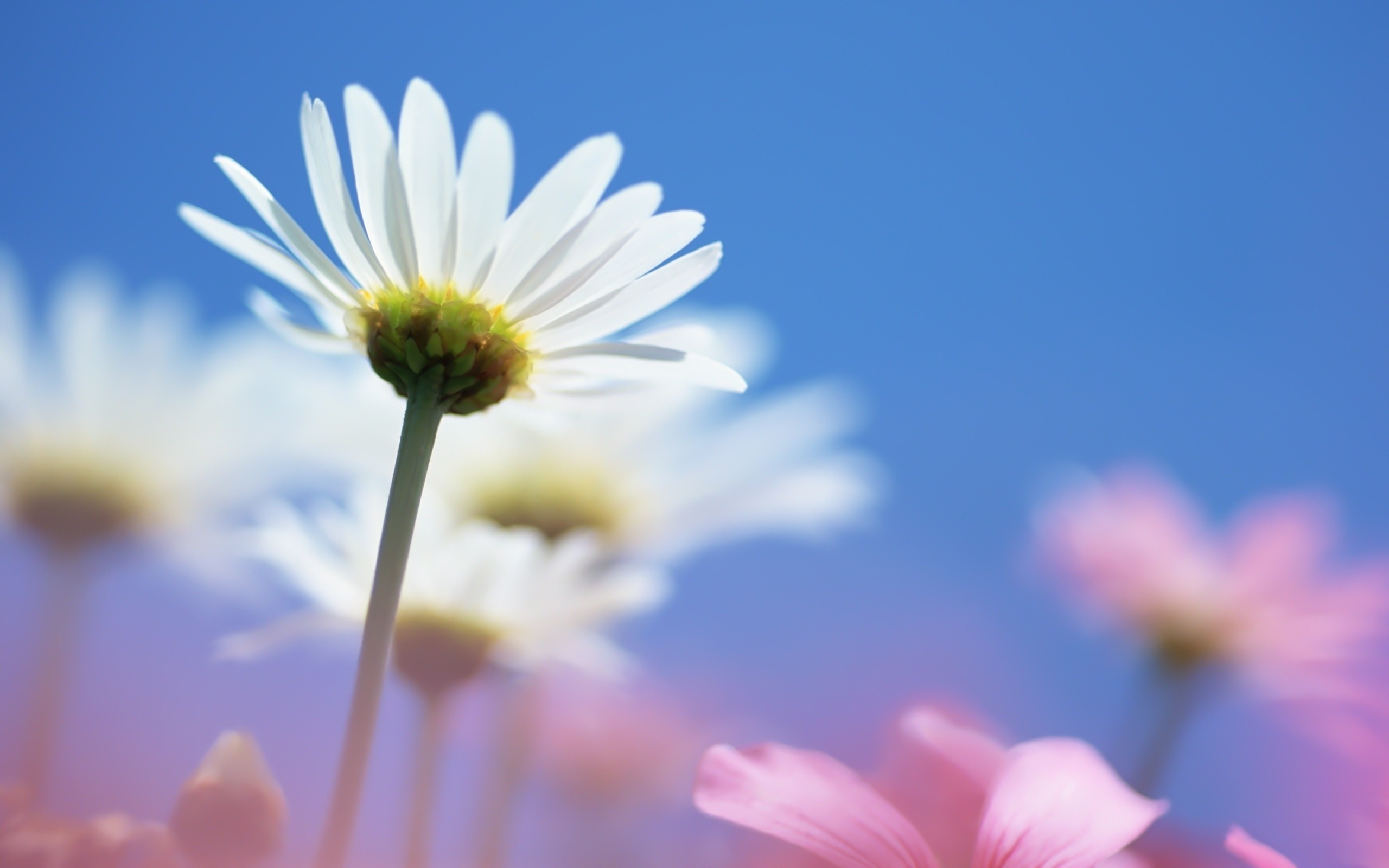 Res: 2560x1600, Summer Flowers 29980