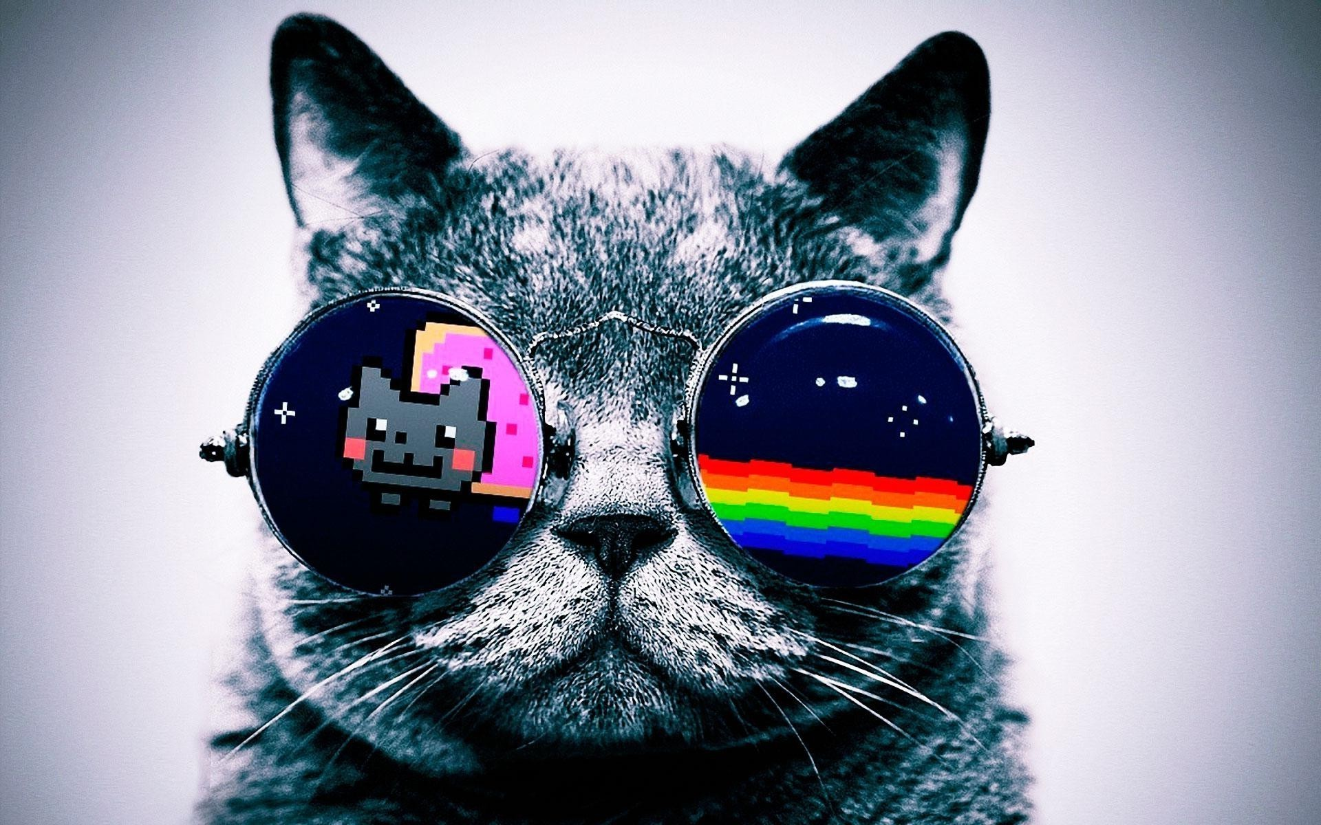 Res: 1920x1200, Animal Wallpapers. Download the following Galaxy Cat ...