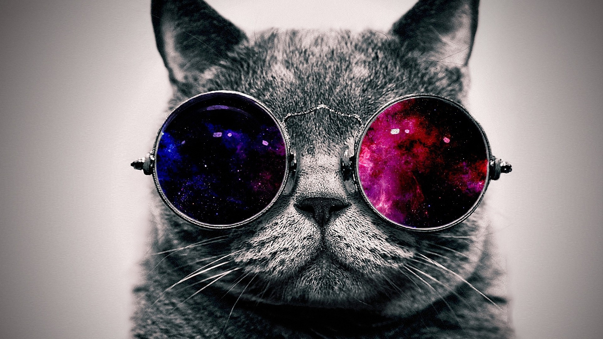 Res: 1920x1080,  Wallpaper cat, face, glasses, thick
