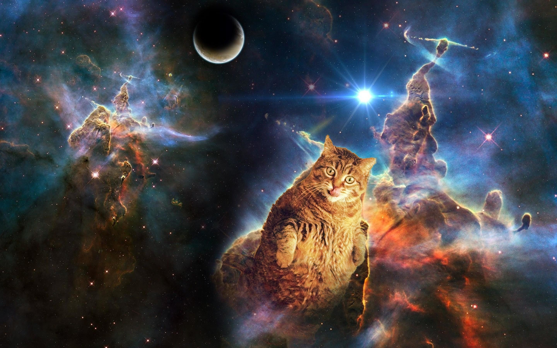 Res: 2880x1800, Space cat wallpaper dump ?