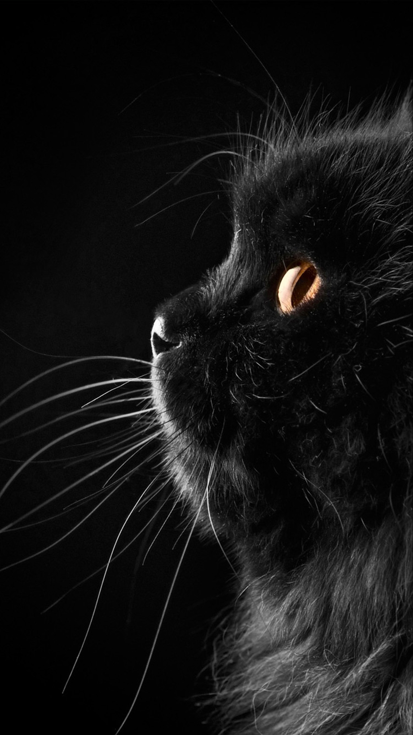 Res: 1440x2560, Black cat close-up Galaxy S7 Wallpapers