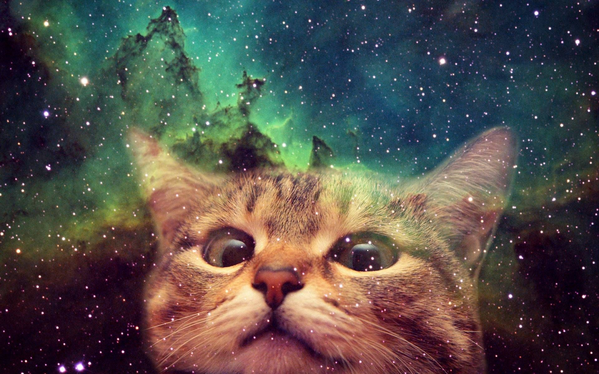Res: 1920x1200, Space Cat Background For Desktop Wallpaper 1920 x 1200 px KB awesome cute  hipster animated cool