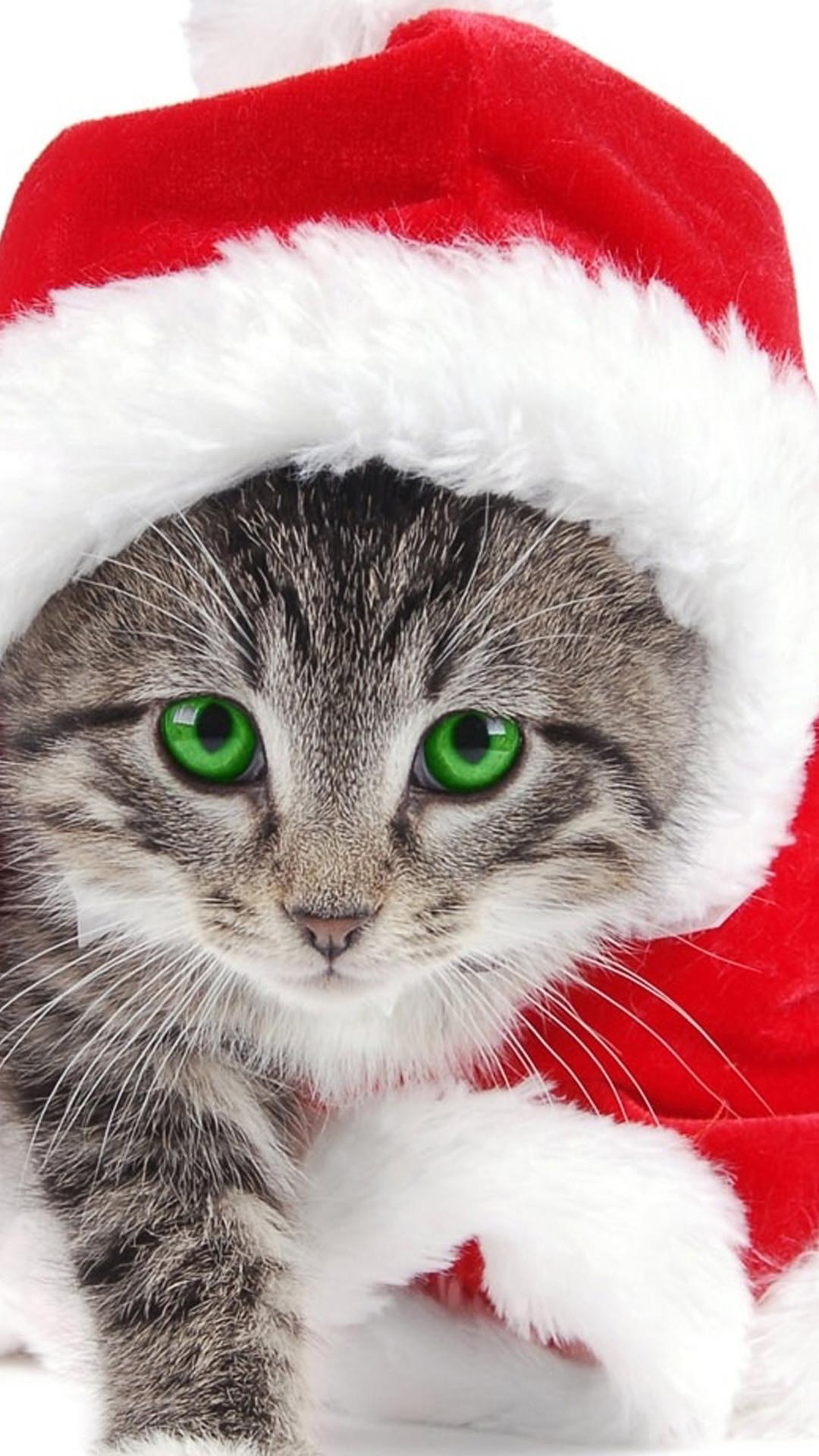 Res: 1080x1920, Samsung Galaxy Wallpaper Christmas | Christmas Cat Samsung Wallpapers, Samsung  Galaxy S5, Galaxy S4