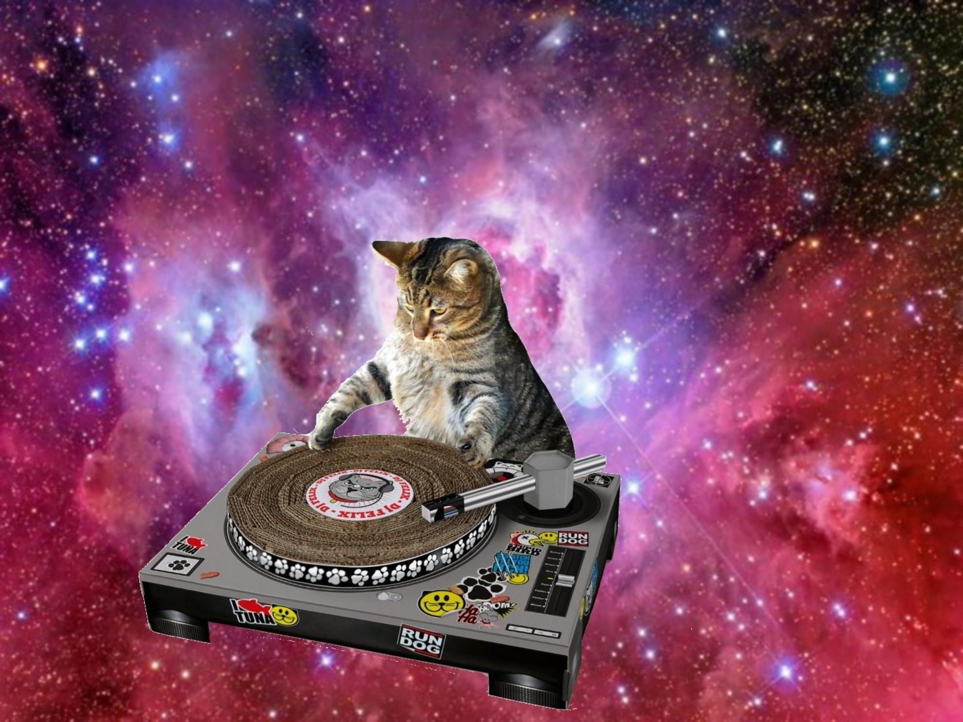 Res: 1984x1488, Galaxy Cat Wallpaper 11