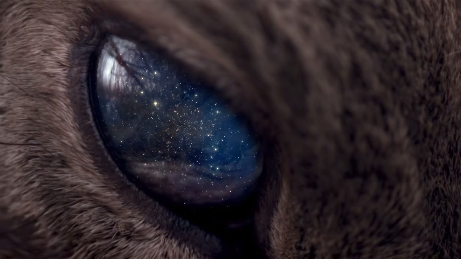 Res: 1920x1080, universe, Space, Stars, Animals, Eyes, Galaxy, Cat Wallpapers HD