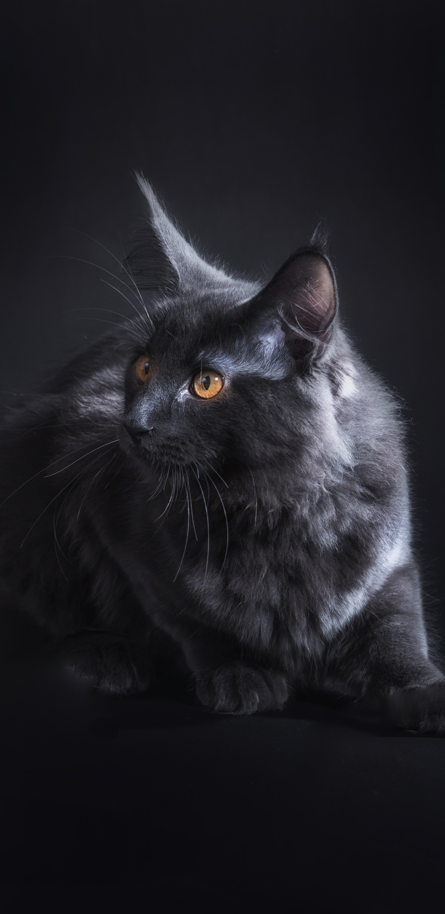Res: 1440x2960, black-cat-5k-pk.jpg