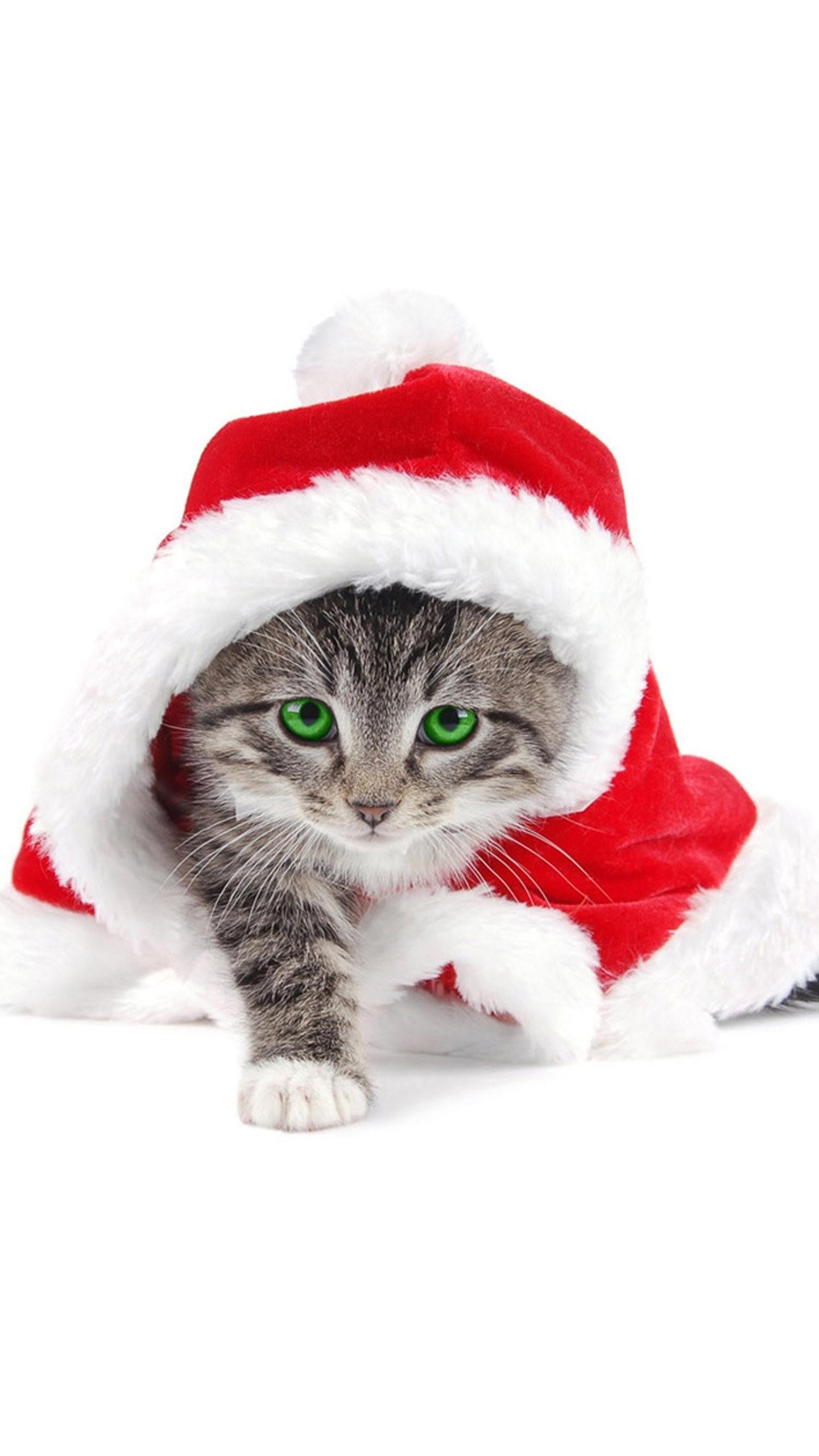 Res: 1440x2560, Christmas Cat Wallpaper. Galaxy S7