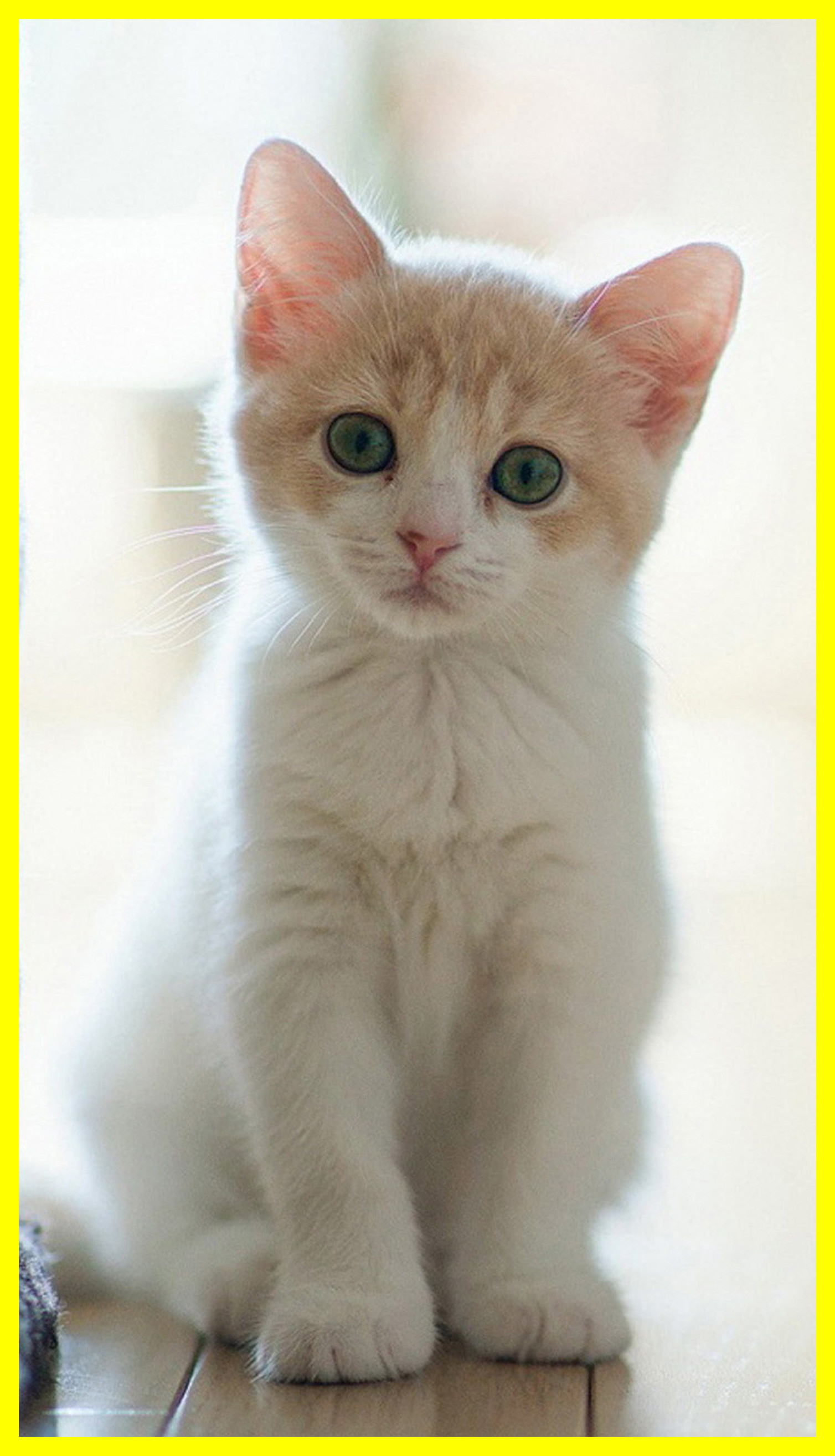 Res: 1508x2628, Cute Cat Wallpaper Cute Galaxy Cat Wallpaper Stunning Cute Hd For Galaxy  Pic Cat Wallpaper Trends