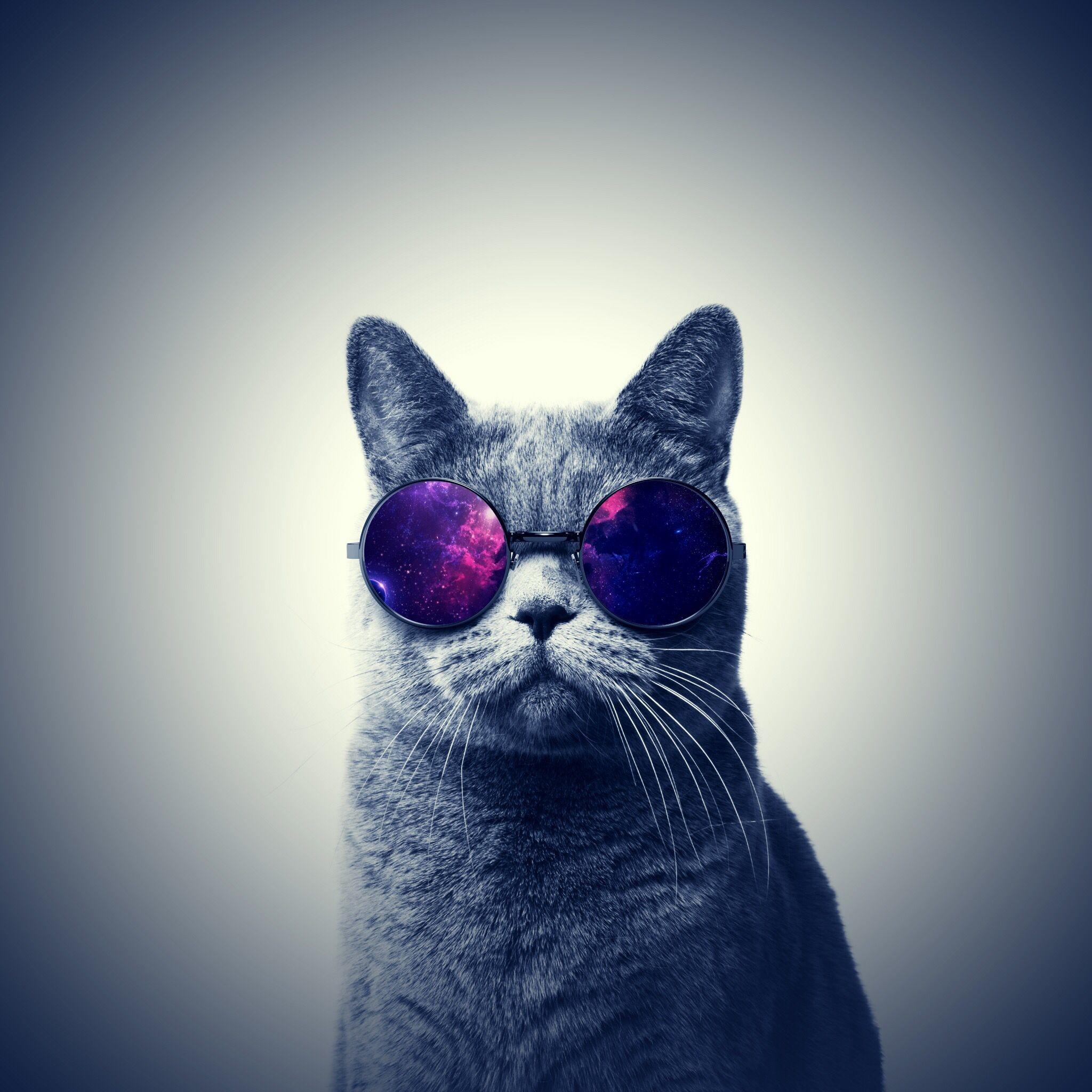 Res: 2048x2048, Cat · Galaxy cat