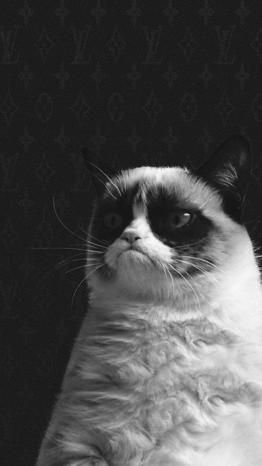 Res: 1080x1920, Cool Zvn:851 - Grumpy Cat Wallpapers, Magnificent Grumpy Cat Hd with Cat  Wallpaper