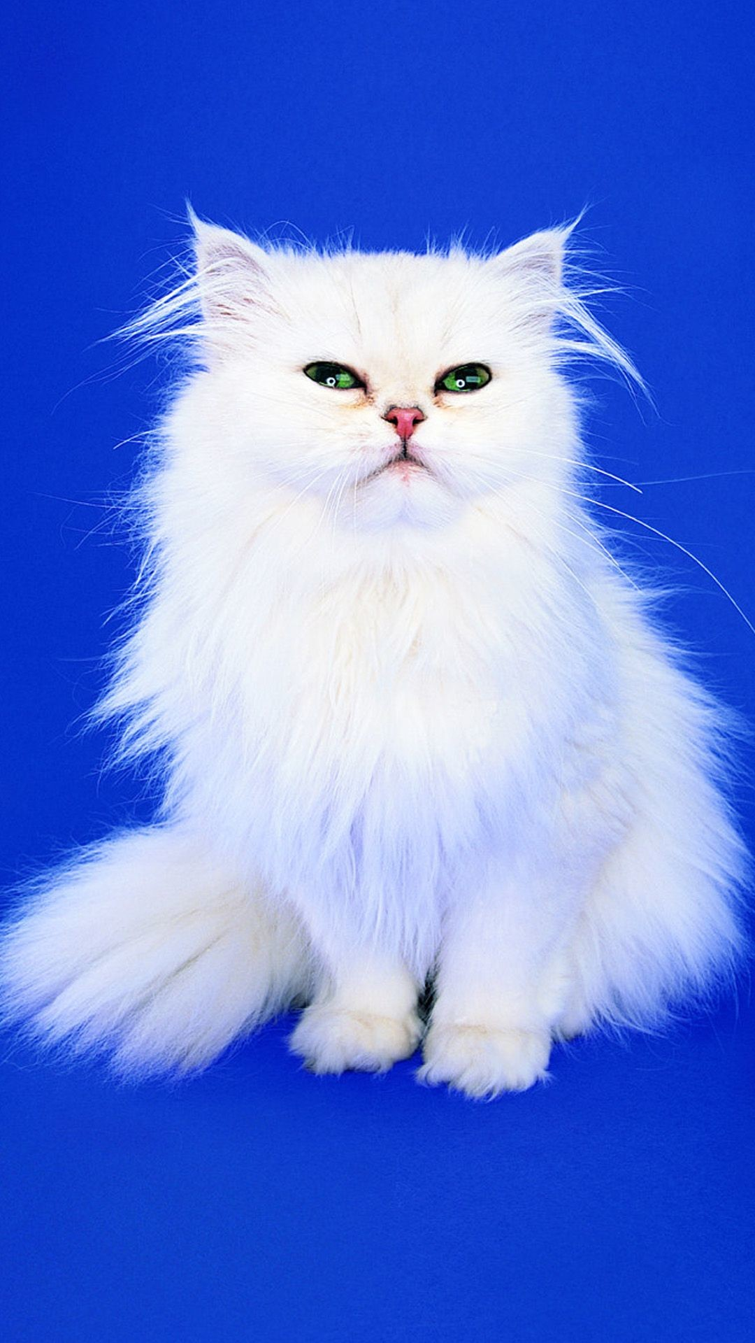 Res: 1080x1920, White Cat Galaxy S4 Wallpapers HD