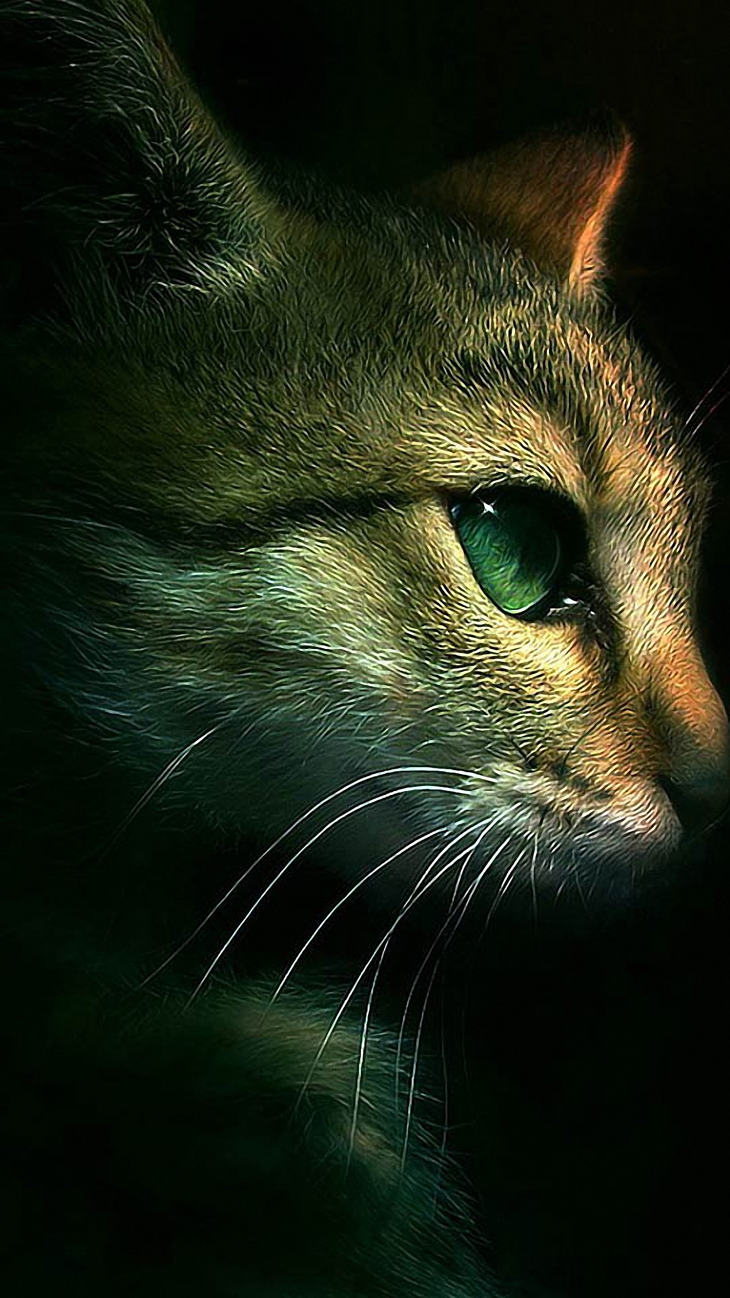 Res: 1440x2560, hd  cat samsung galaxy wallpapers