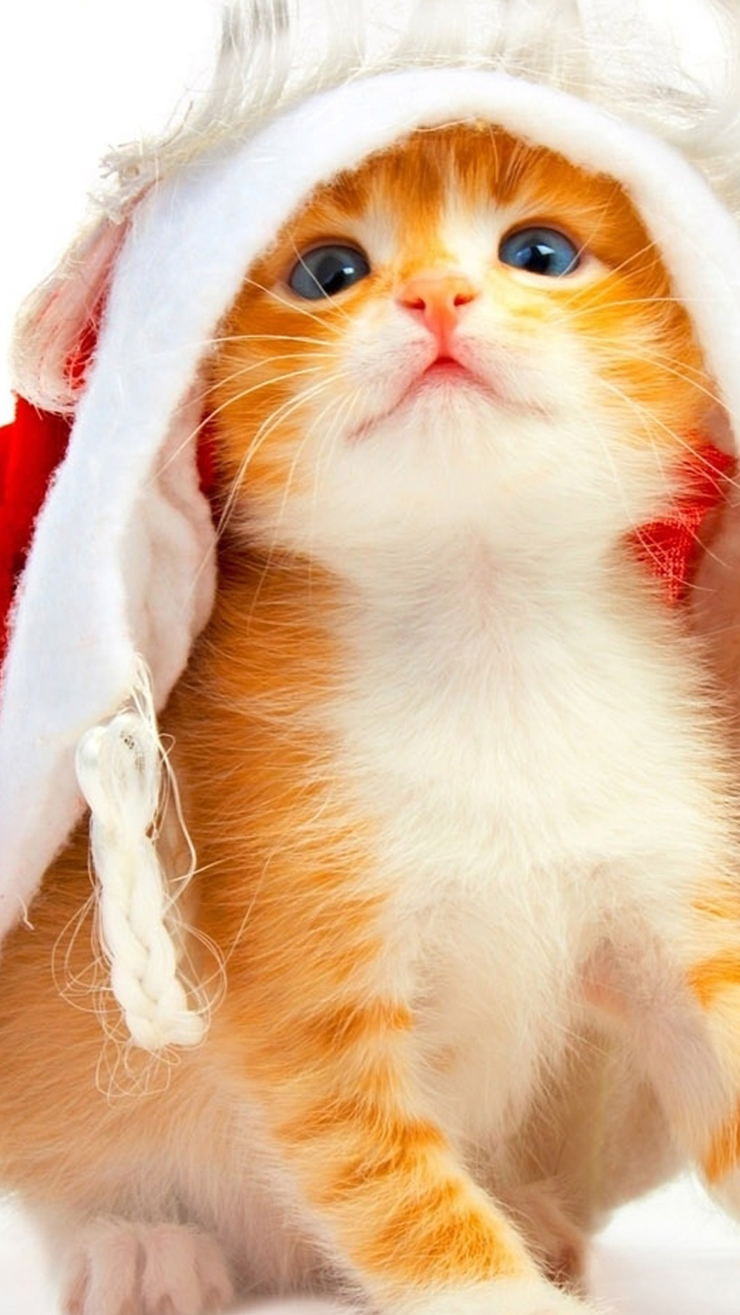 Res: 1080x1920, Christmas Cats Samsung Wallpapers