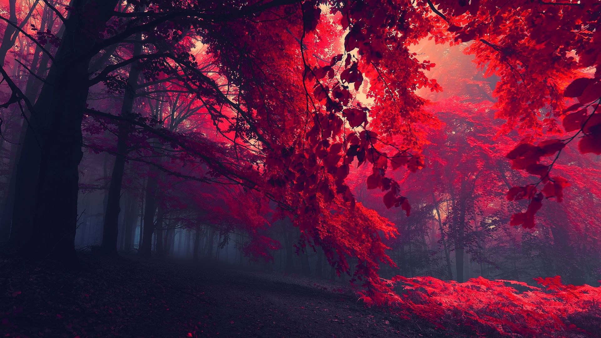 Res: 1920x1080, Red Forest Trees HD Wallpaper. « »