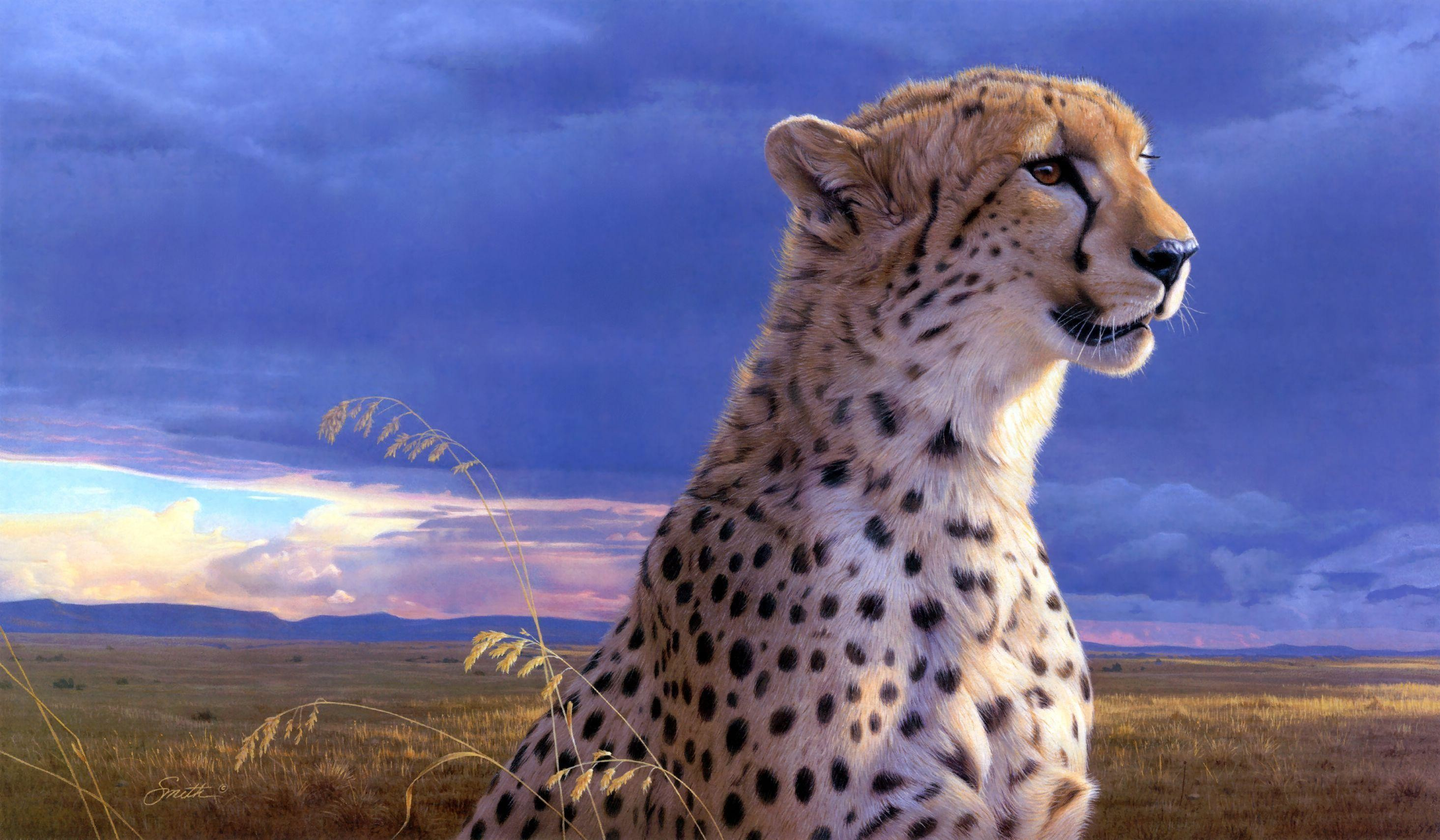 Res: 2930x1710, 226 Cheetah Wallpapers | Cheetah Backgrounds Page 5