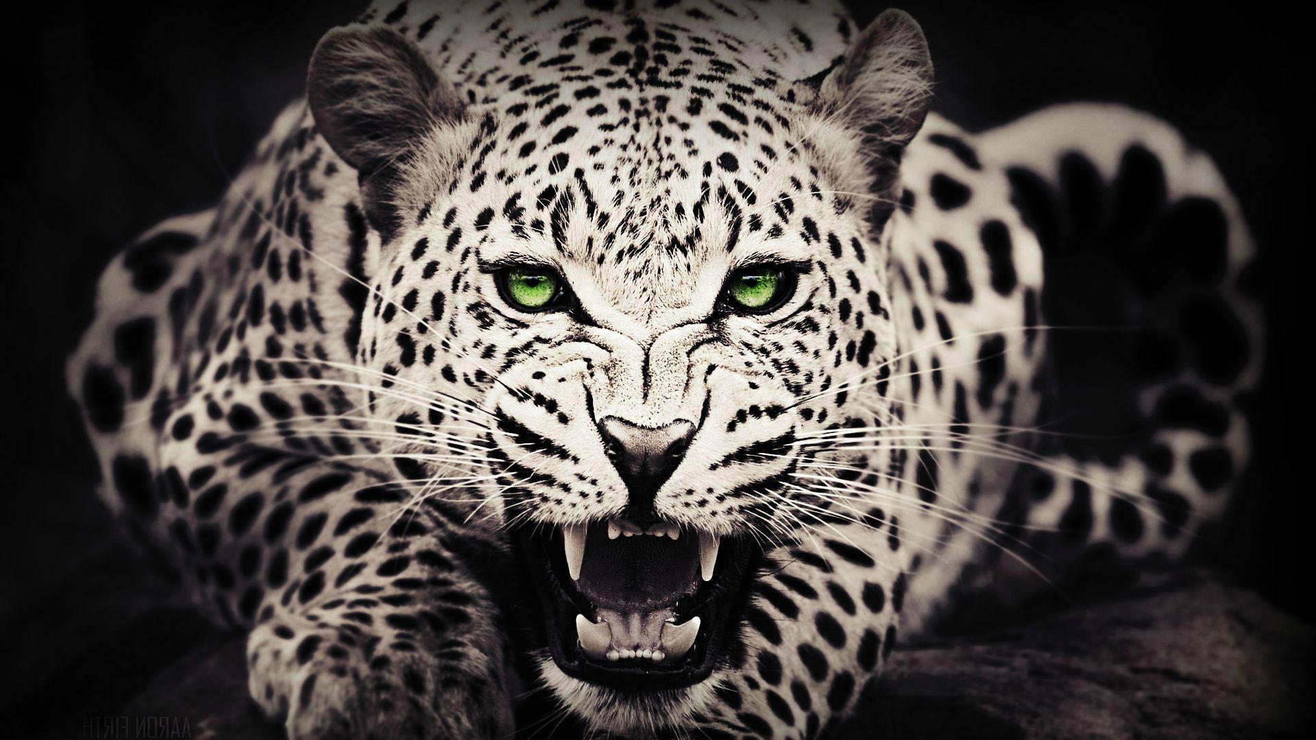 Res: 1920x1080, Cheetah Wallpapers 23 - 1920 X 1080