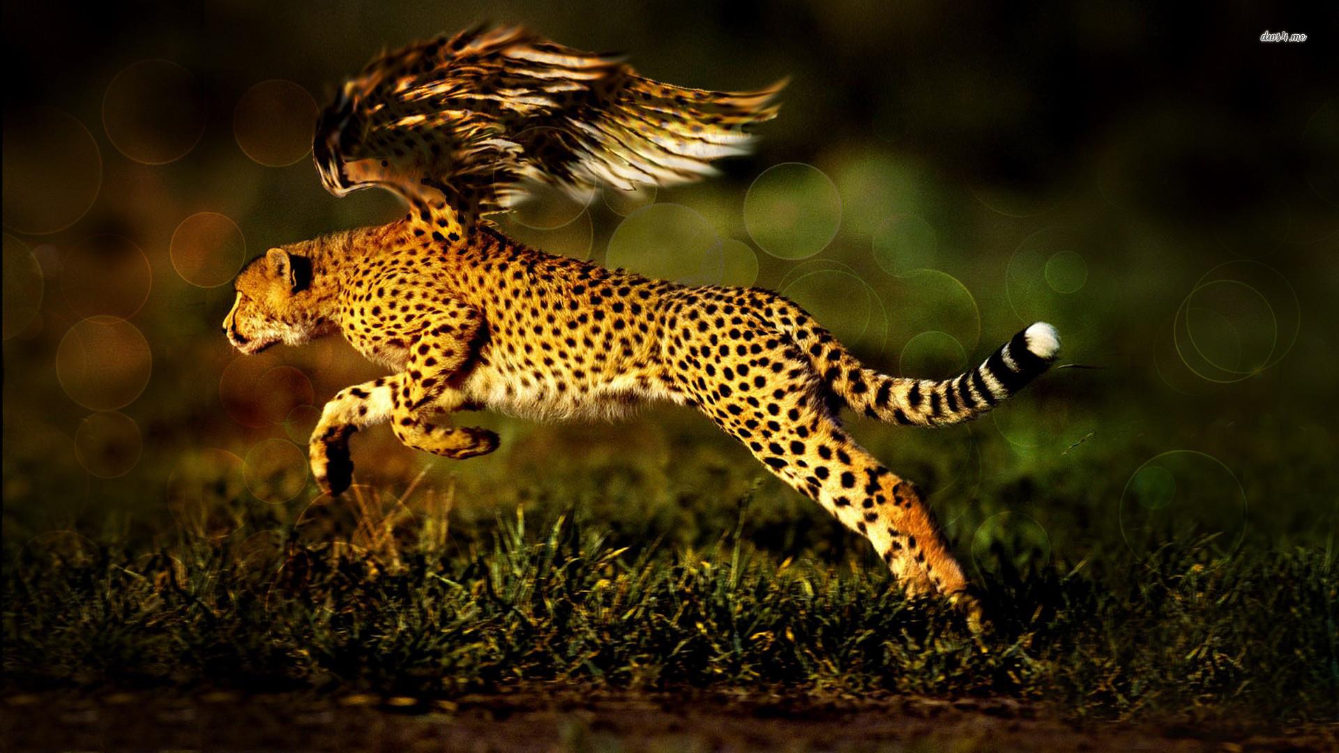 Res: 1920x1080, Fantasy - Cheetah Wallpaper