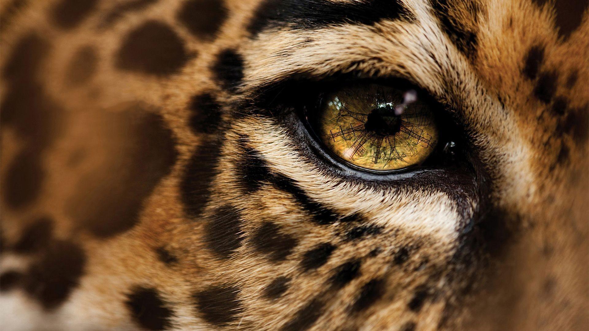 Res: 1920x1080, Cheetah Wallpaper 12 – HD Wallpaper, Wallpaper Pics - The Best .