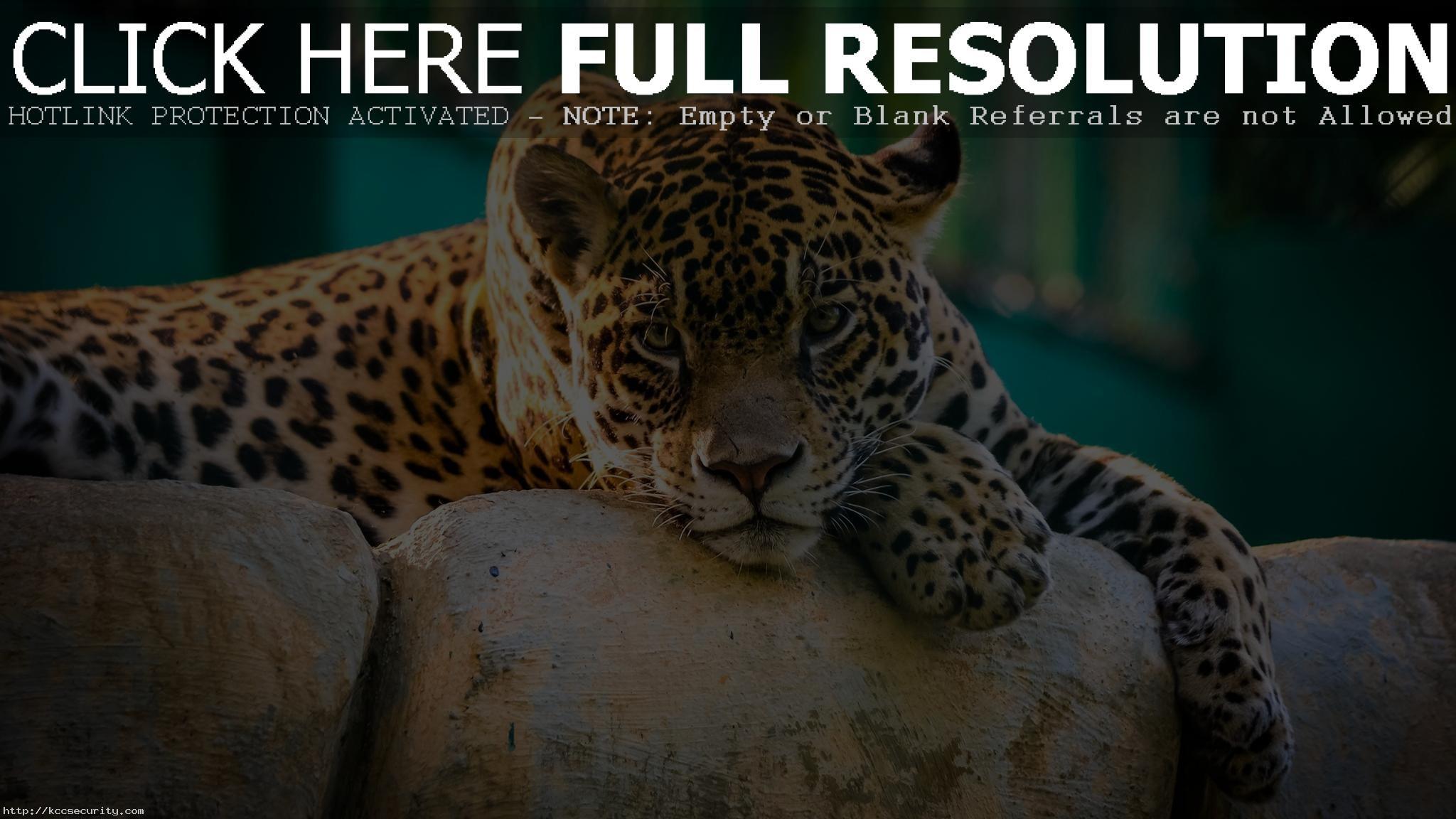 Res: 2048x1152, Cheetah Wallpaper 10452