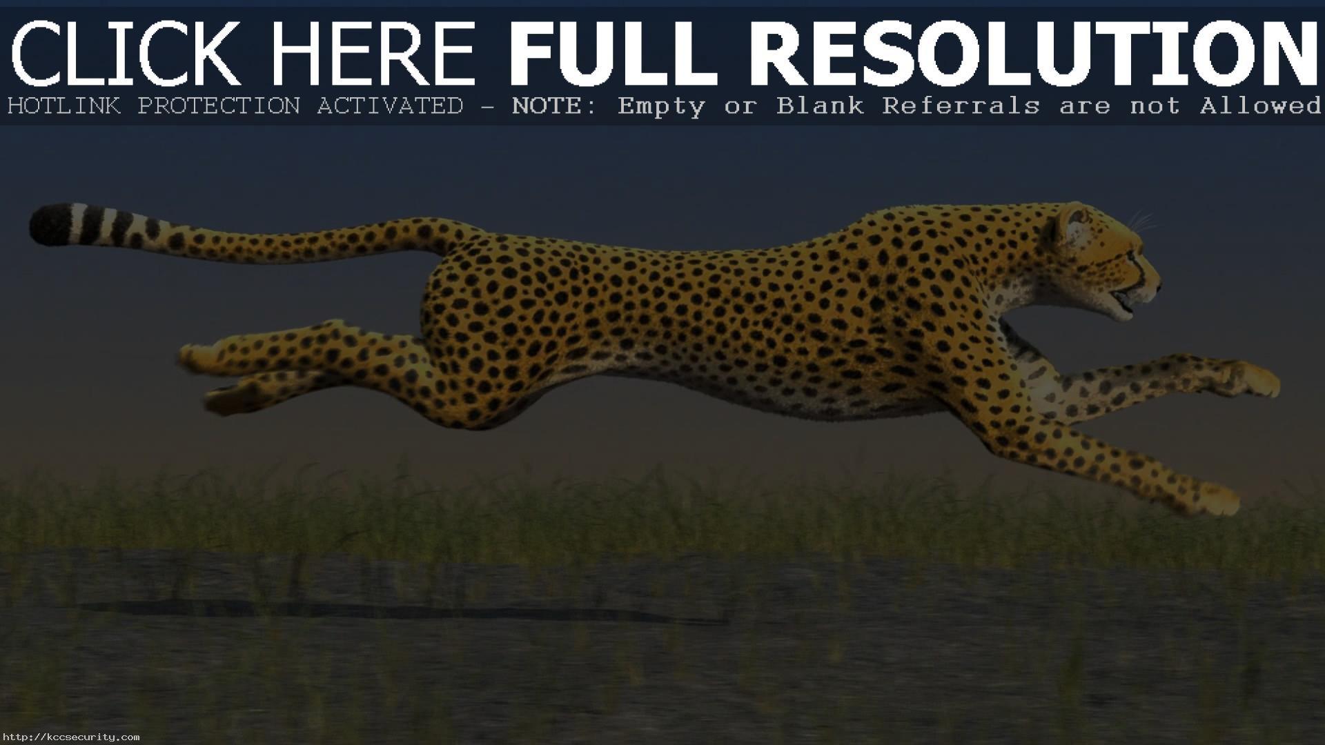 Res: 1920x1080, Cheetah Wallpaper 10434