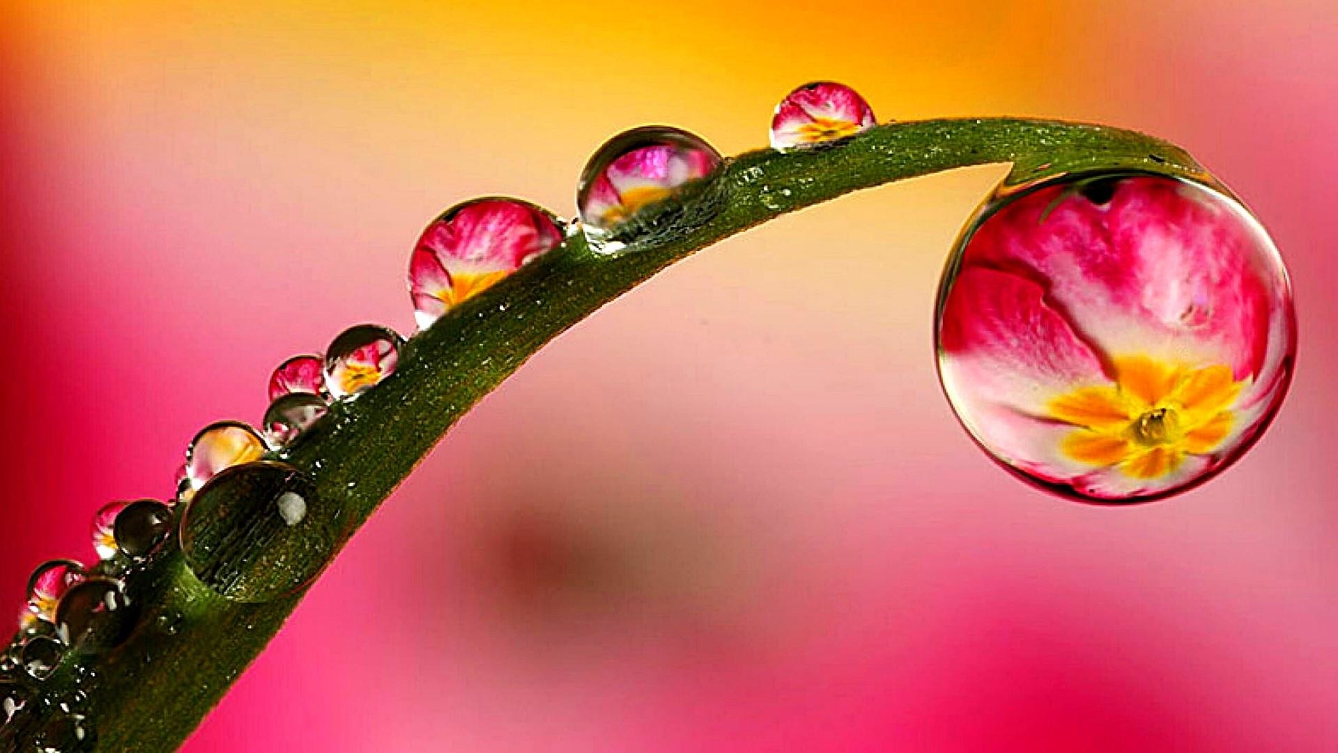 Res: 1920x1080, Macro Water Drops Wallpaper | Wallpaper Studio 10 | Tens of thousands HD  and UltraHD wallpapers for Android, Windows and Xbox