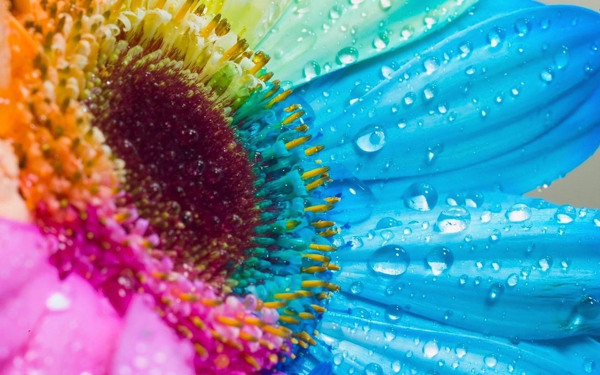 Res: 1920x1200, Flowers multicolor rainbows water drops wallpaper