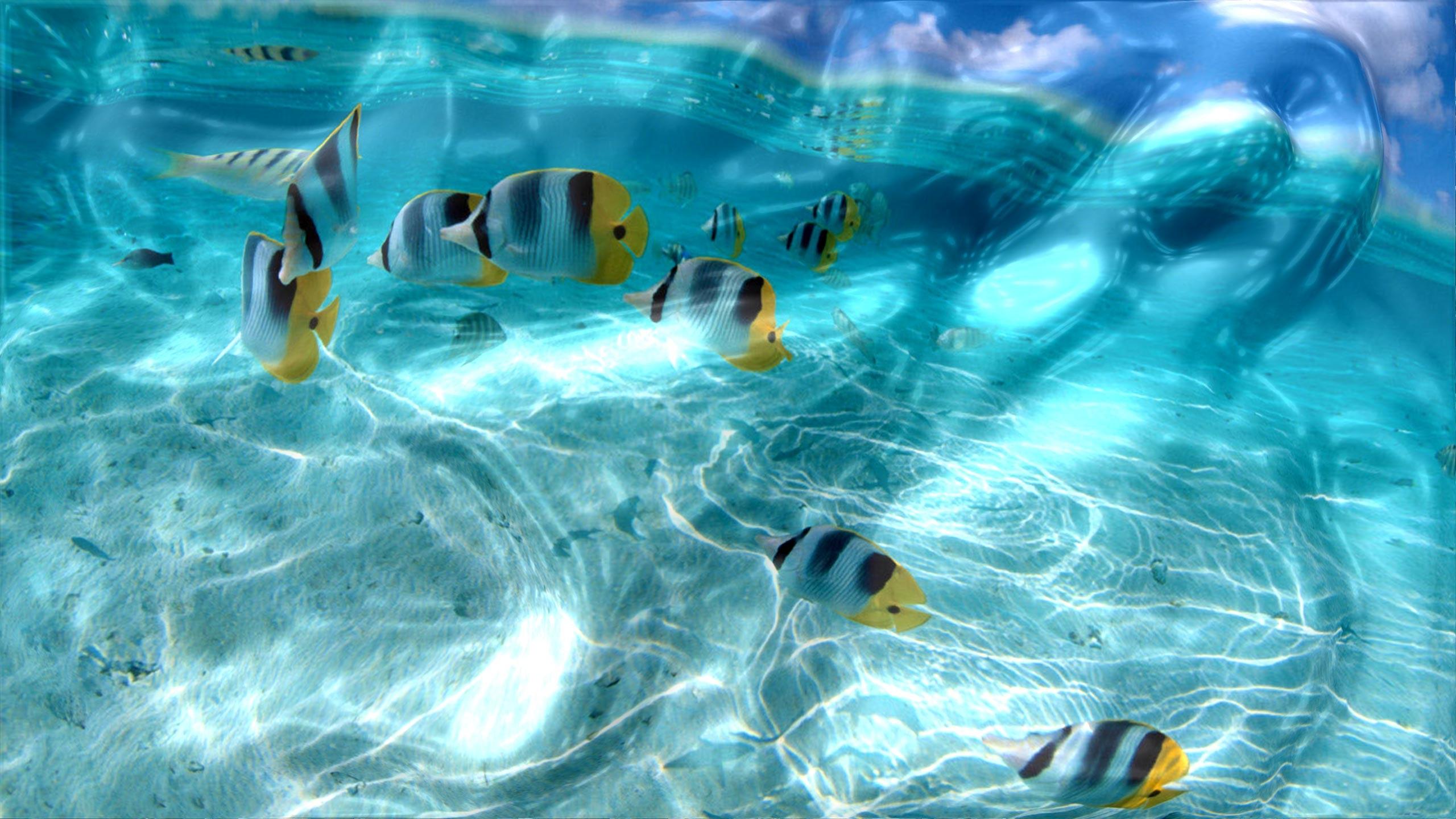 Res: 2560x1440, Watery Desktop 3D