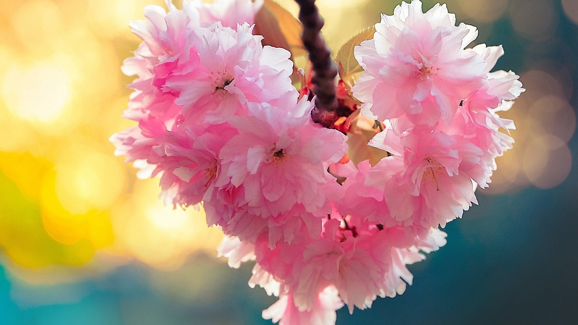 Res: 1920x1080, Download Flowers Heart Bloom Spring Love Nature Download Hd Images Of For Pc