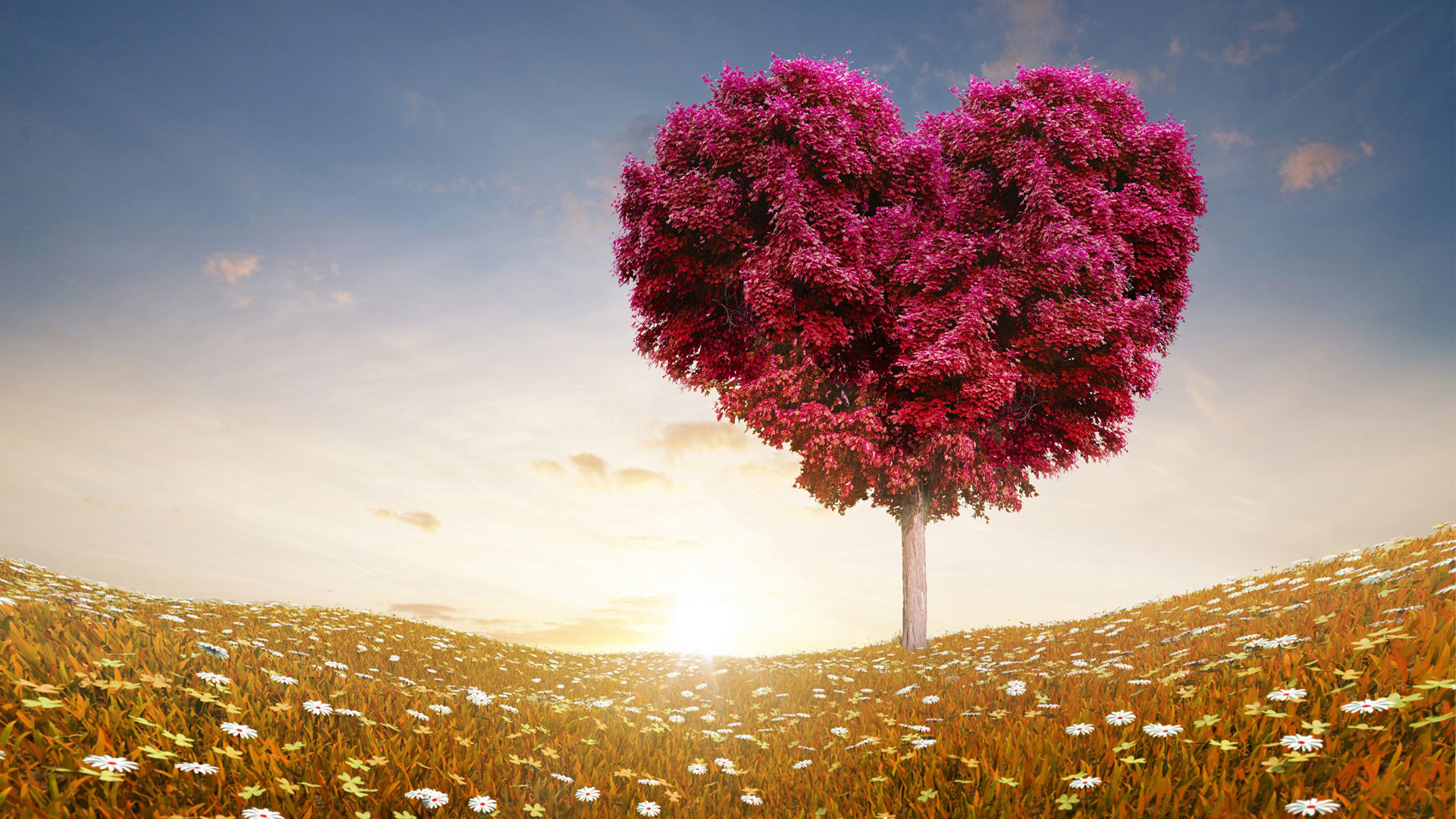 Res: 1920x1080, Wallpaper For Widescreen Love Heart Nature Tree Leaves Desktop  Backgroundwith Hd 1080p
