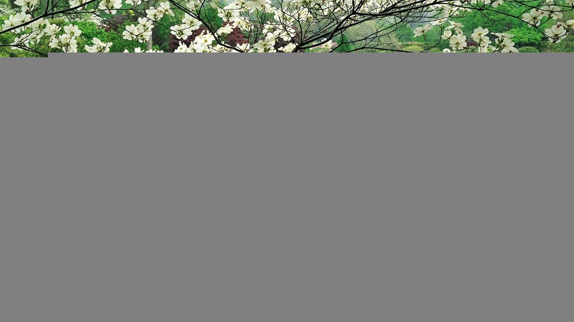 Res: 1920x1080, Japanese Garden Wallpaper