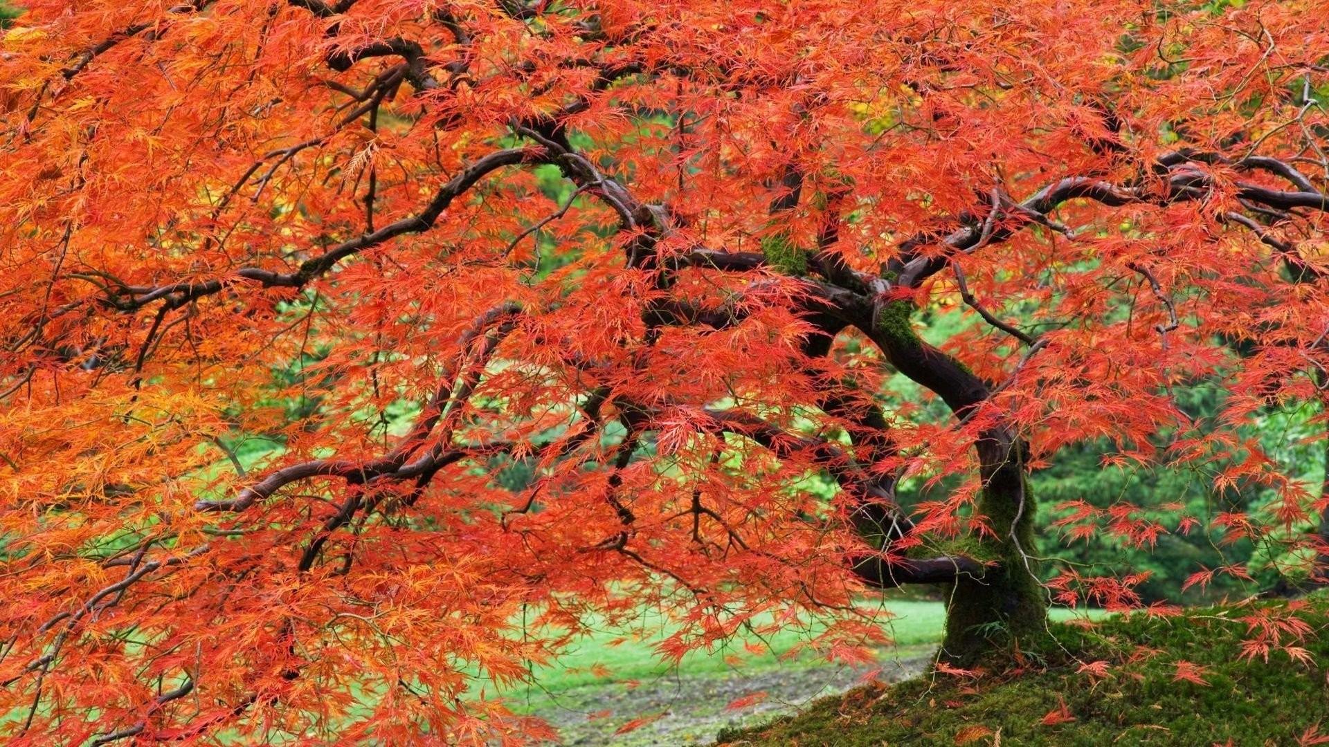 Res: 1920x1080, portland japanese garden