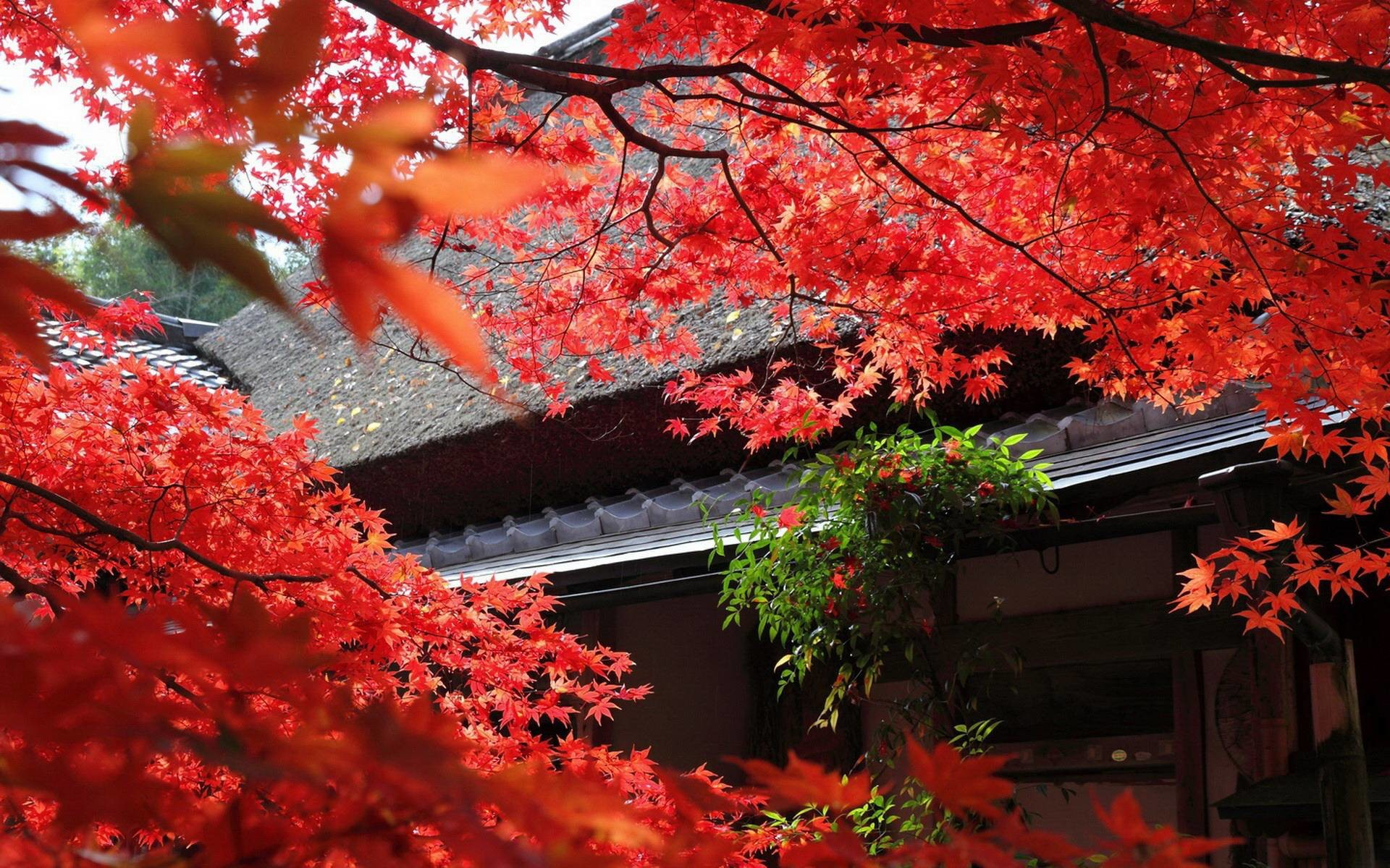 Res: 1920x1200, Japanese Garden Wallpapers - Full HD wallpaper search