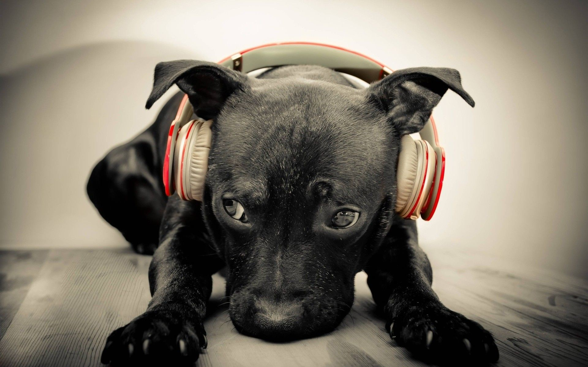 Res: 1920x1200, Let me introduce you: DJ Lab. The world's best #Labrador ...