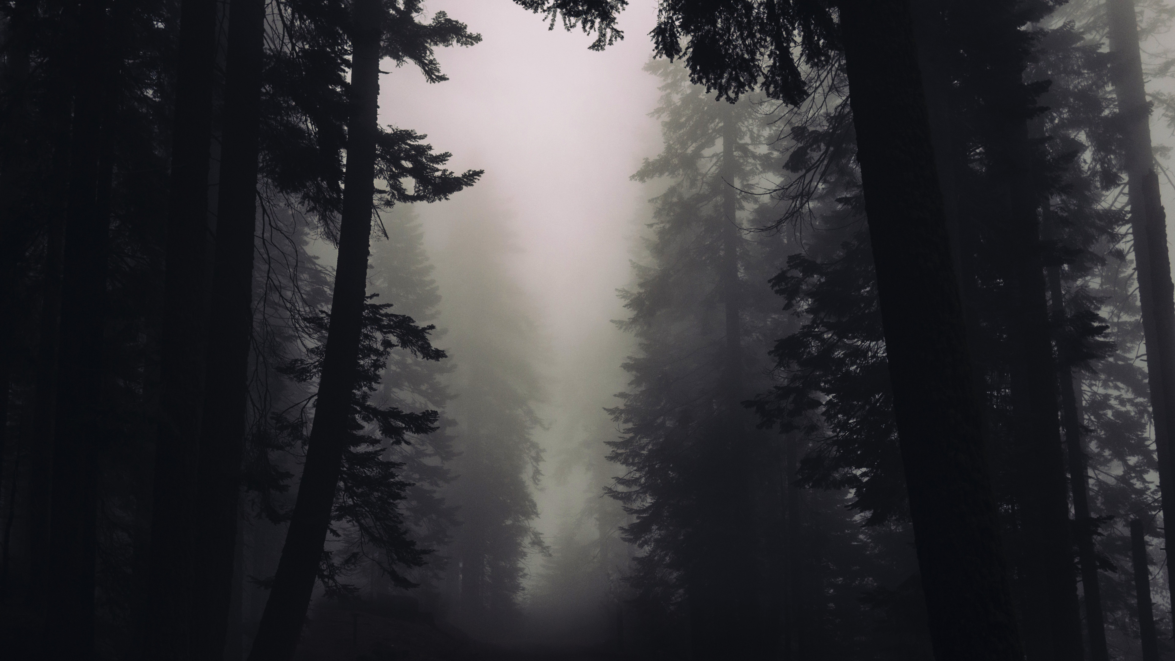 Res: 3840x2160, Gothic Forest 4K Wallpaper Download Gothic Forest 4K Wallpaper Download