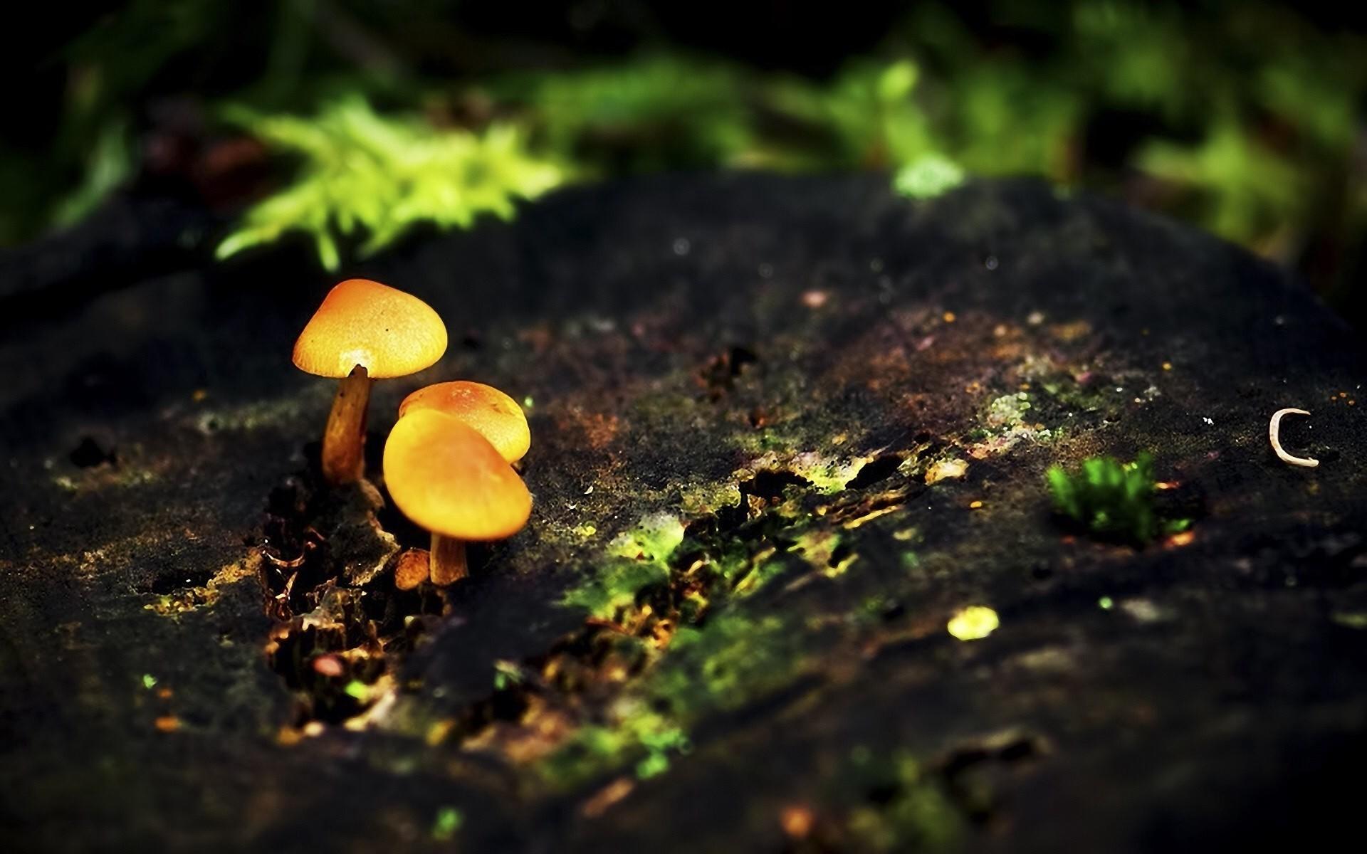 Res: 1920x1200, 1920x1080 mushroom 3d live wallpaper #91699