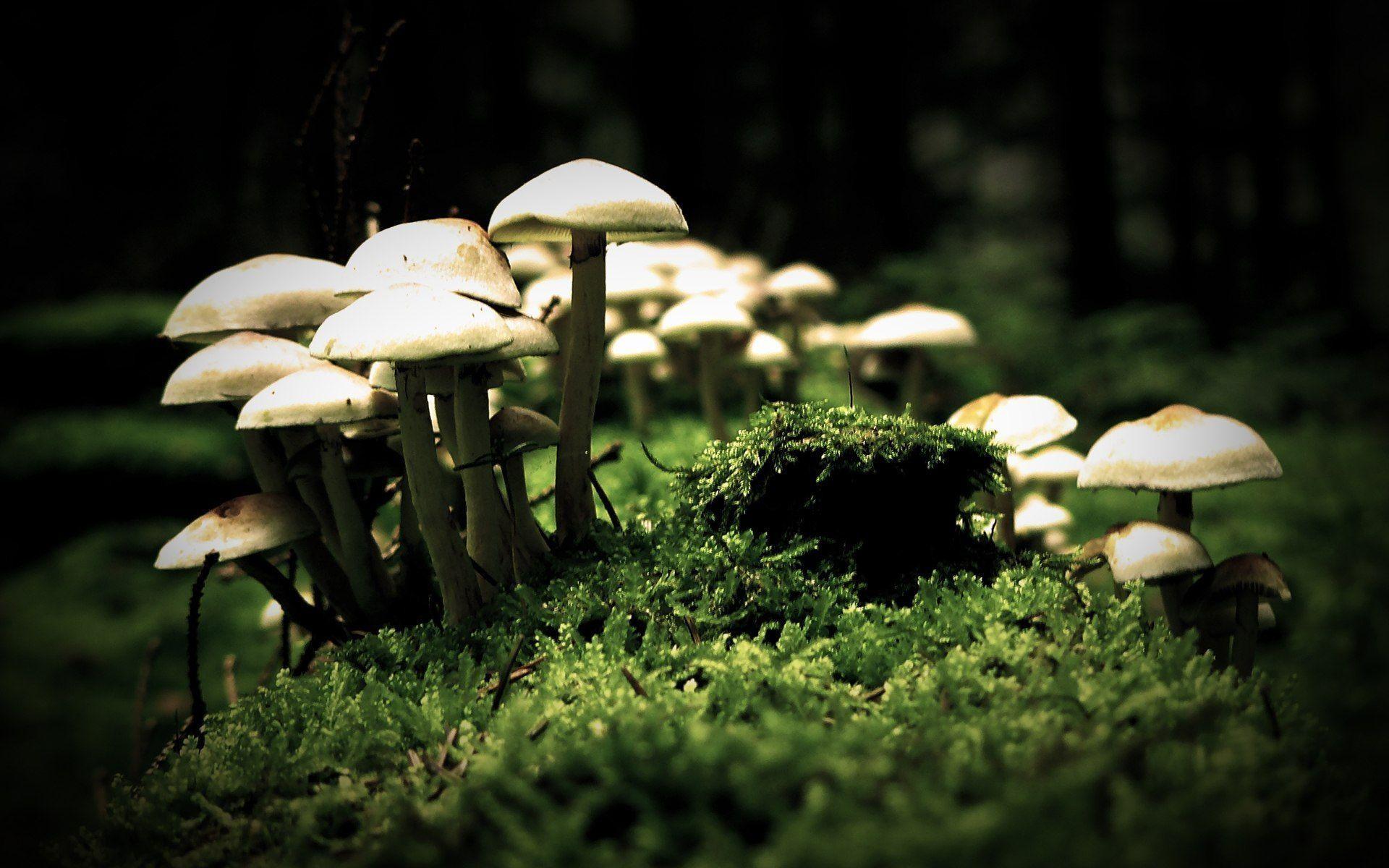 Res: 1920x1200, Mushrooms HD Wallpaper | Mushrooms Pictures | Cool Wallpapers