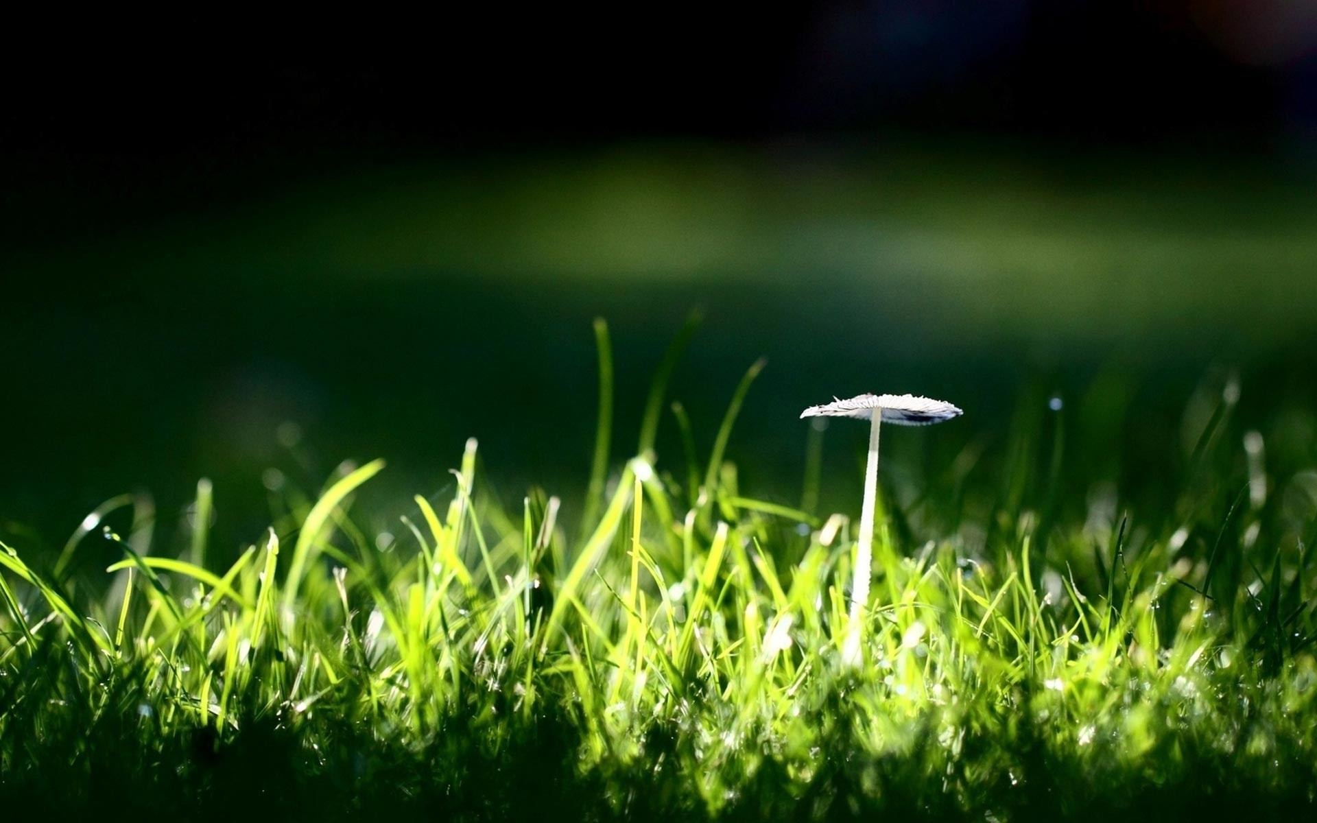 Res: 1920x1200, Mushroom Background 27508